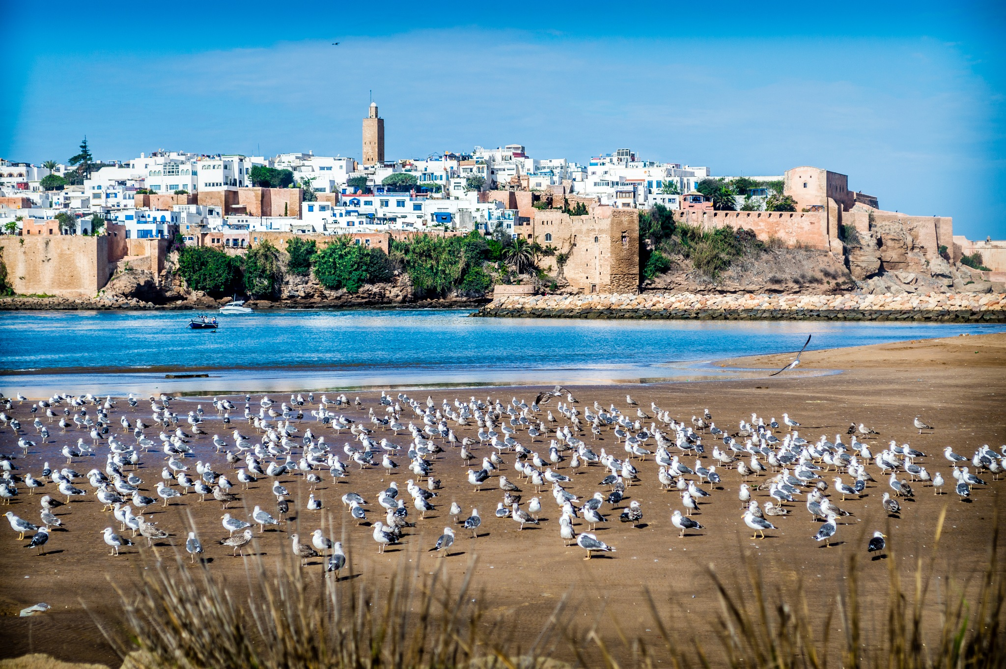 Seagull's club by Badr Morchid