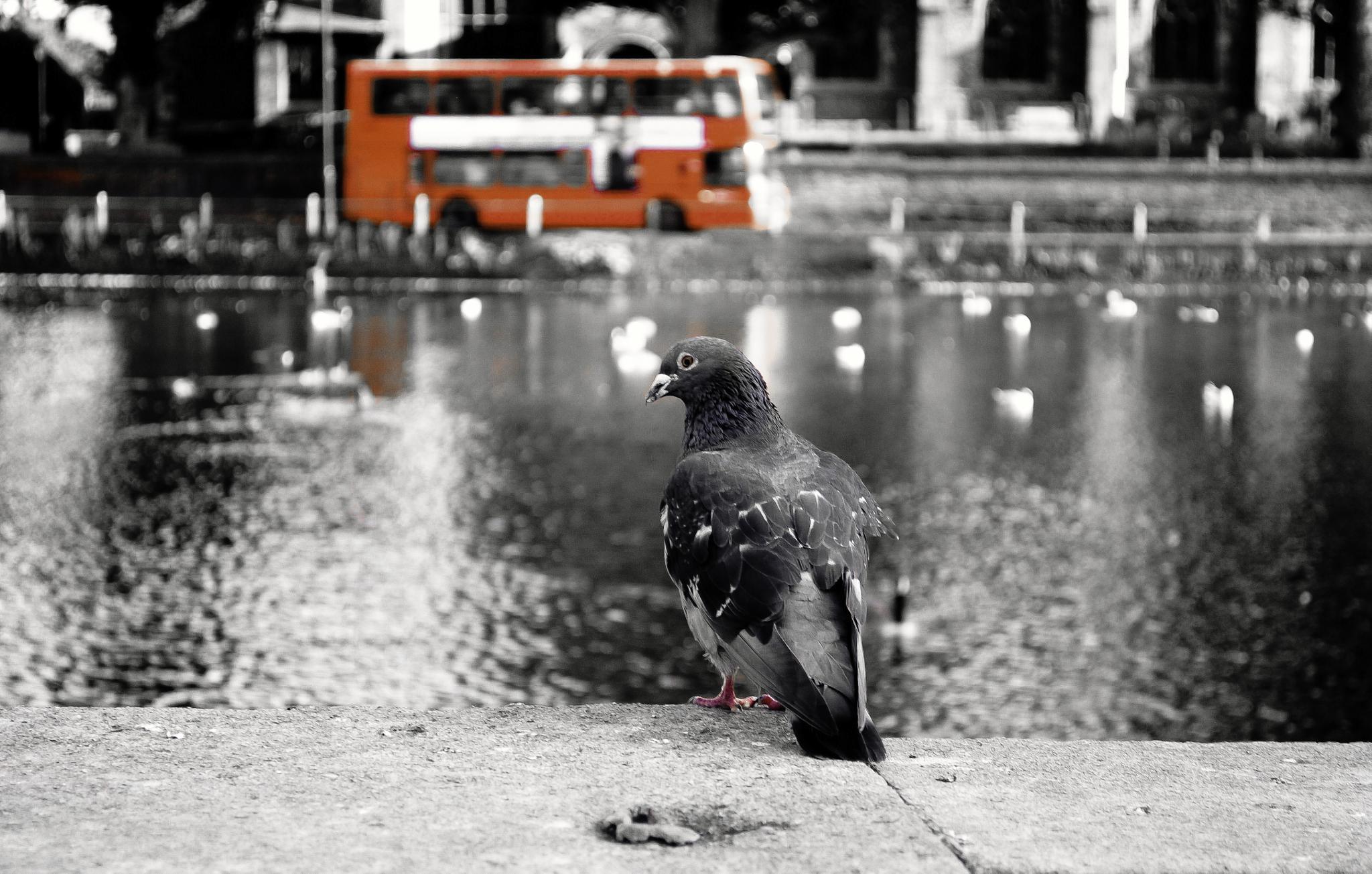 London by ryanphotography