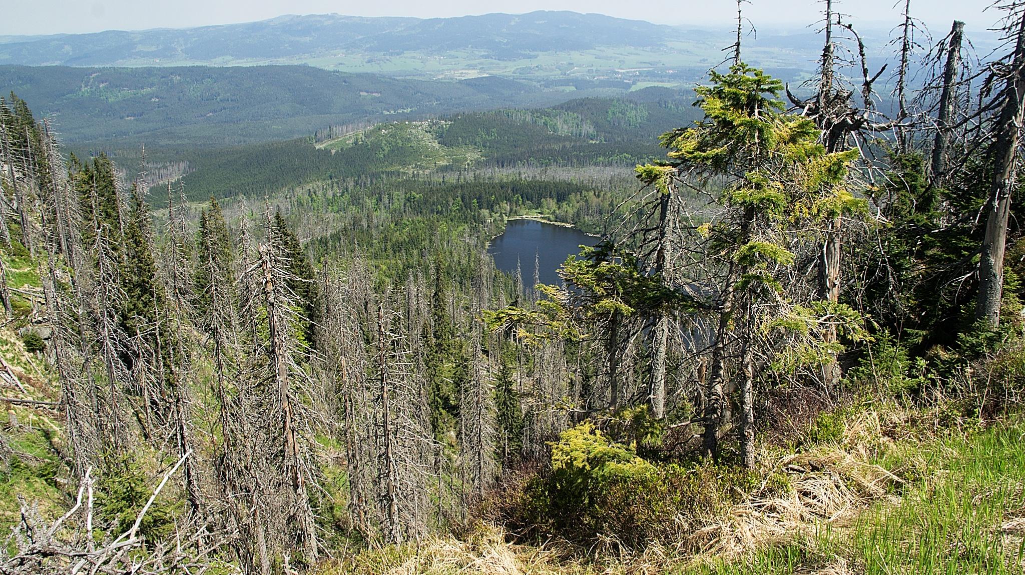 Lake Plesne  jezero from the montain Plechy in Sumava mountains by kleckaj6
