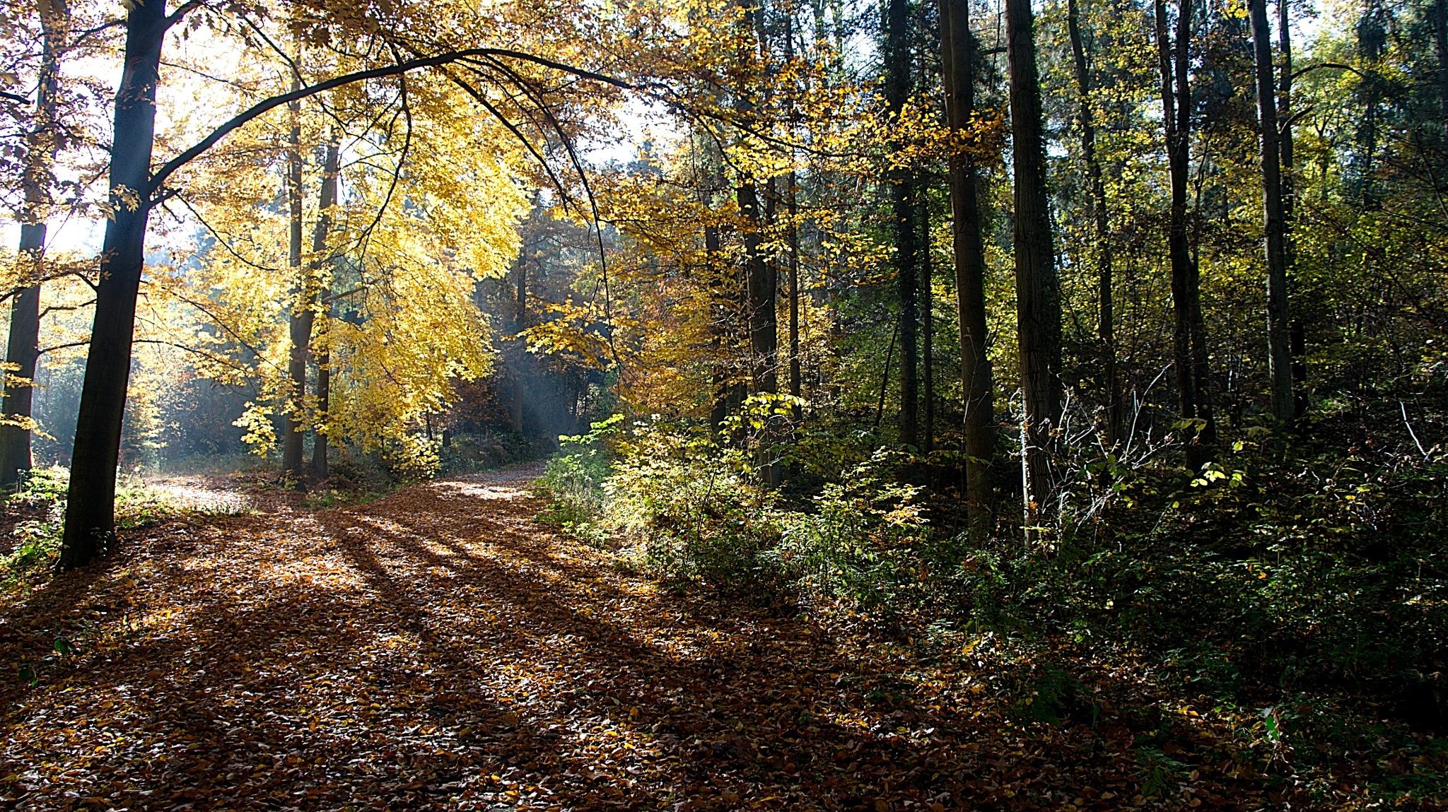 Autumn in the forest by kleckaj6
