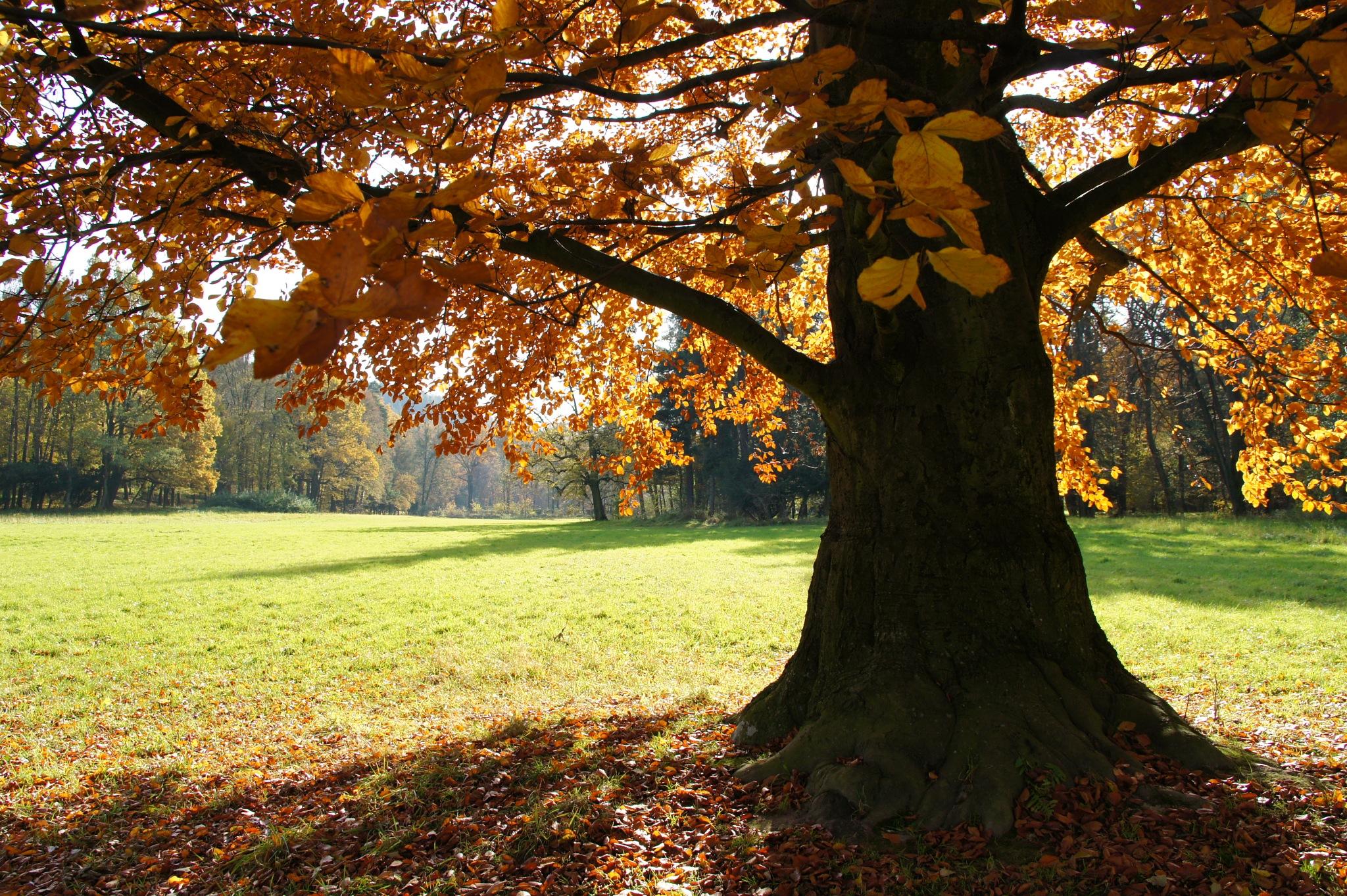 Autumn by kleckaj6