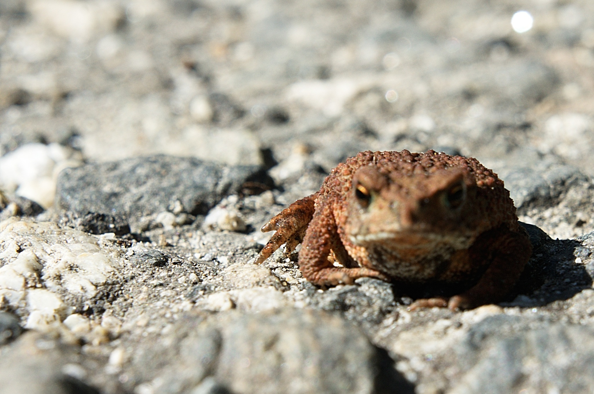 Frog by kleckaj6