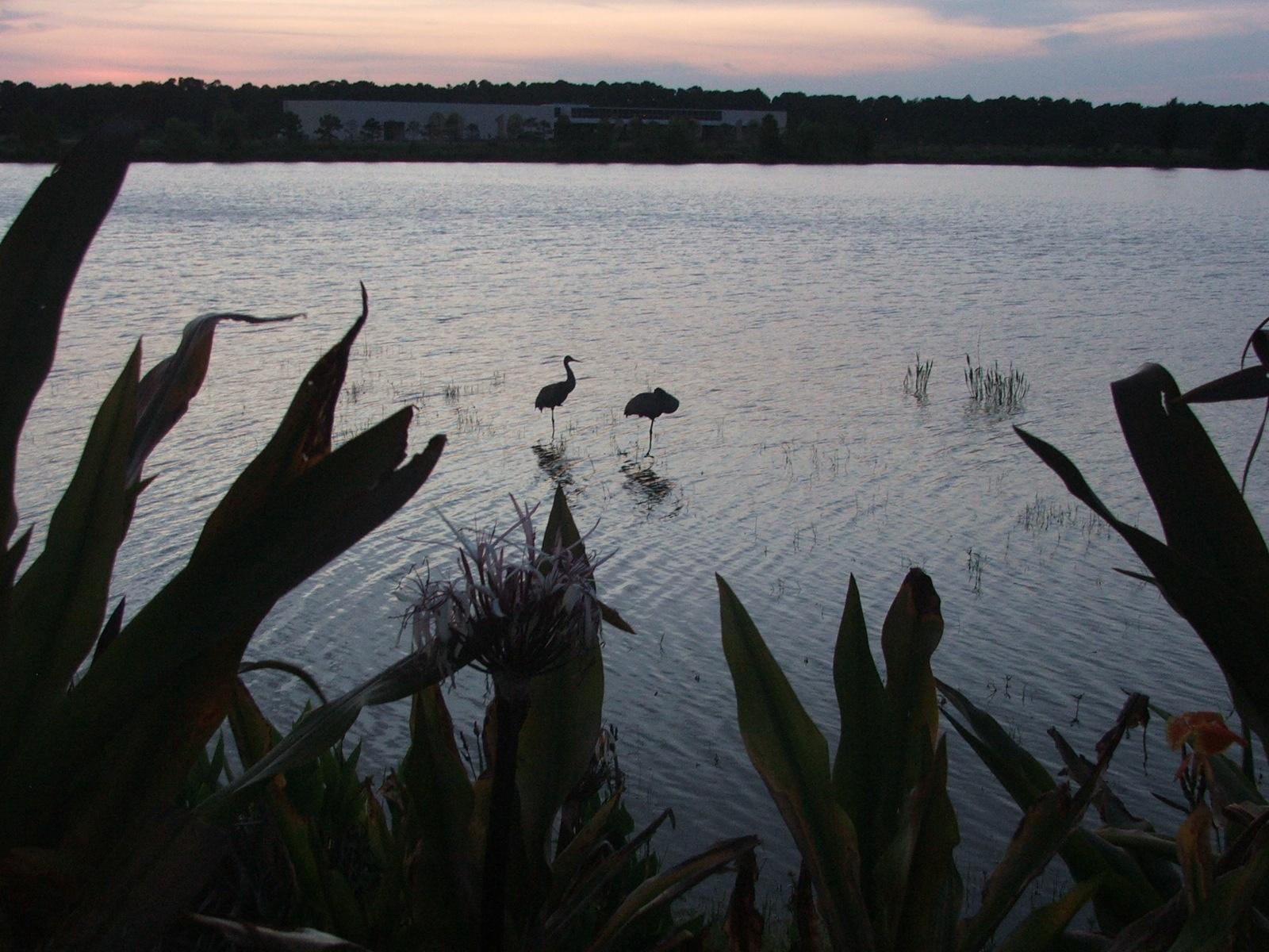 Storks at dusk by F J Bering