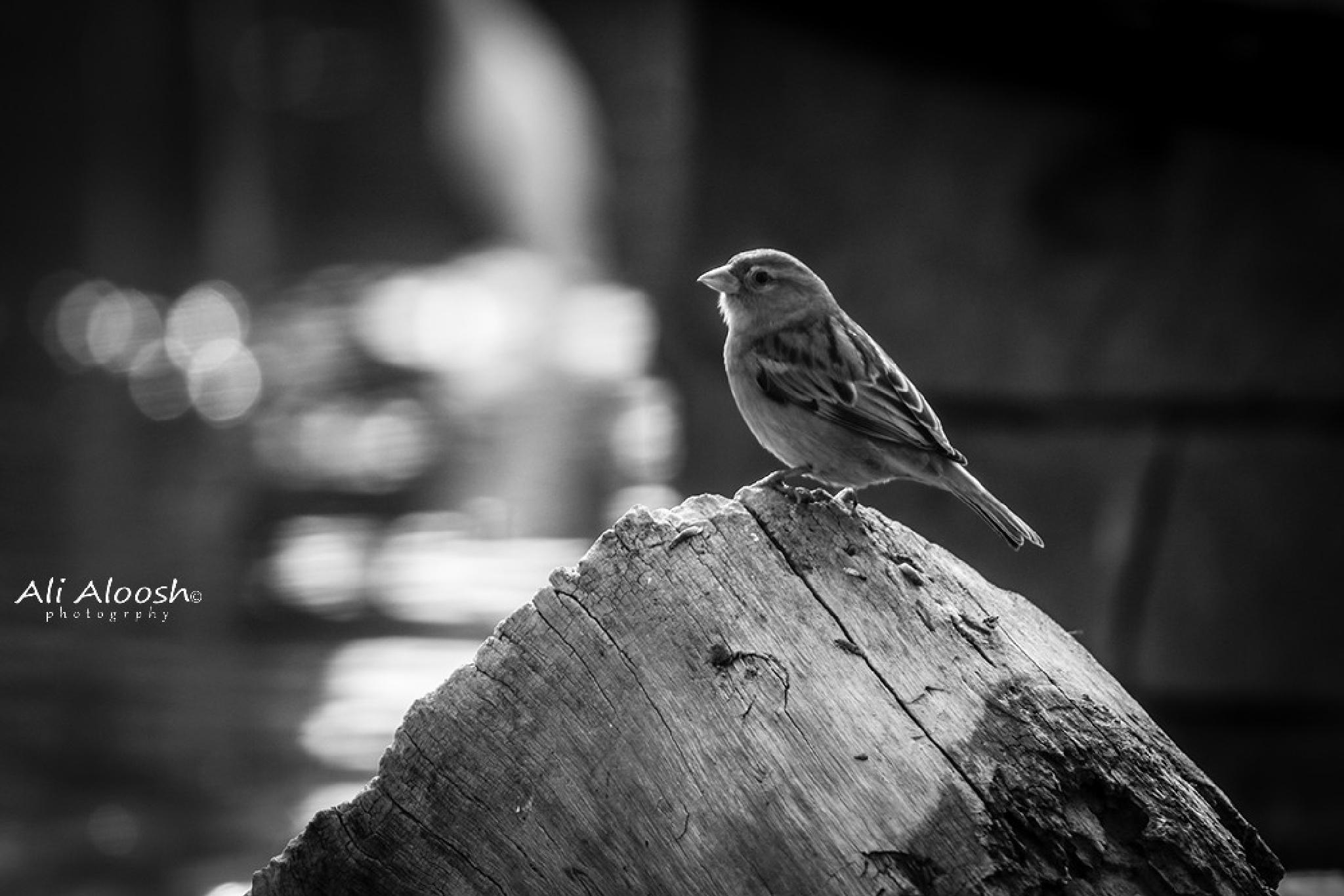 bired... by Ali Aloosh