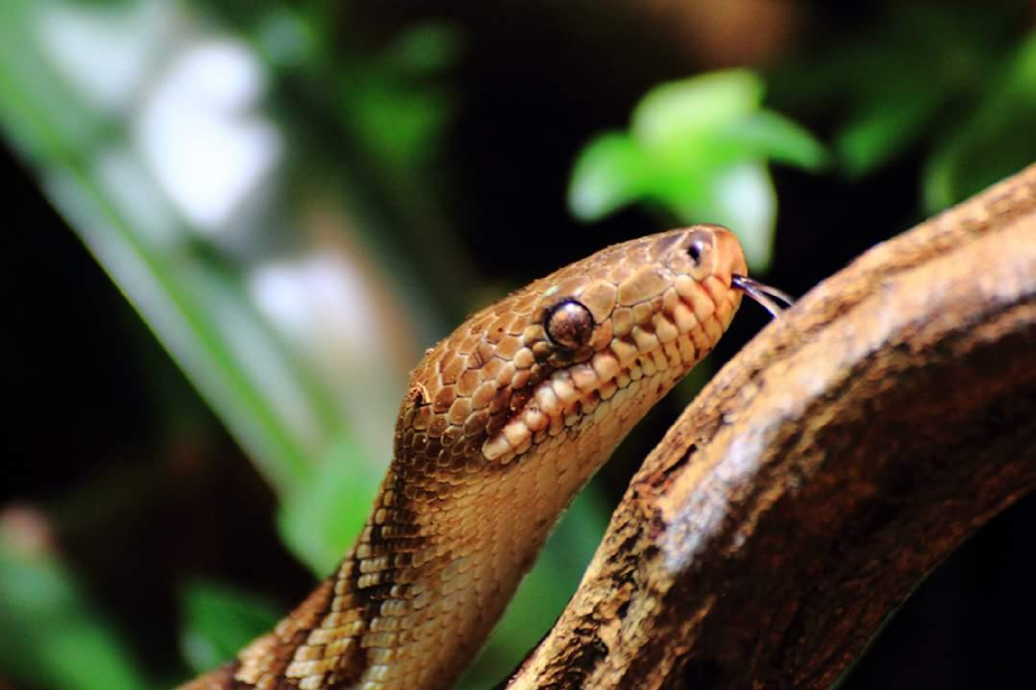 Snake by Steve Flanagan