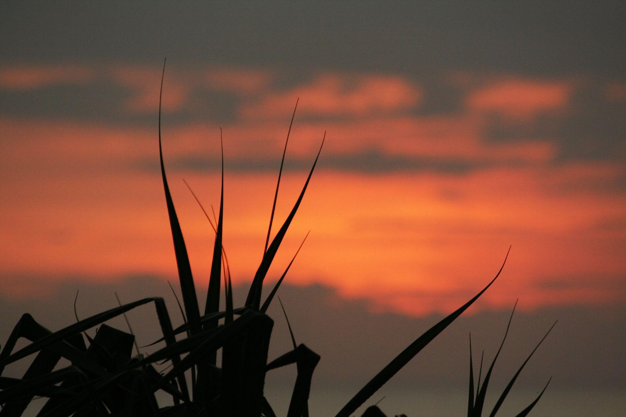Dazzling Sun by nader eskandari