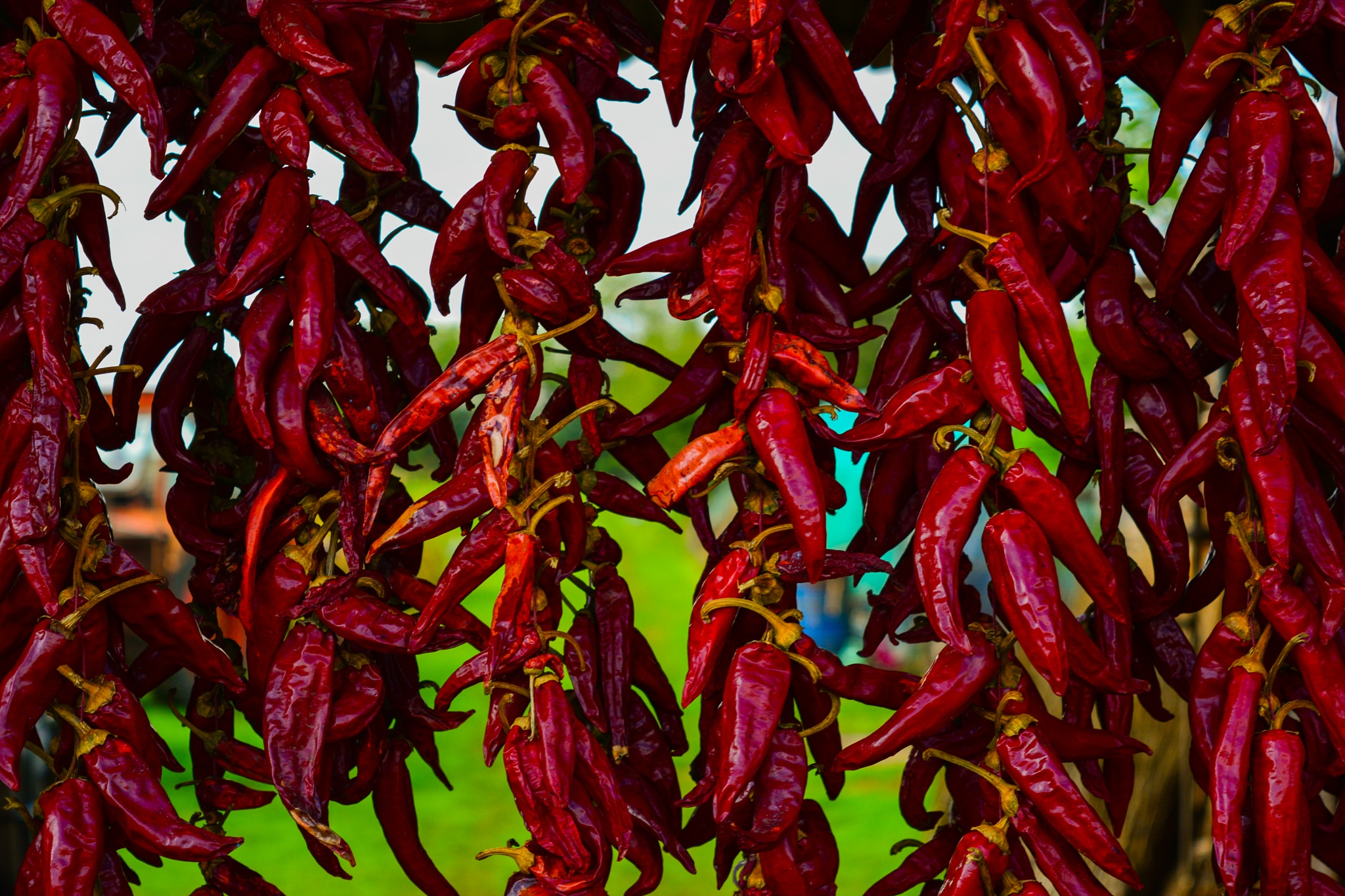 Red peppers by Agatha Taylor