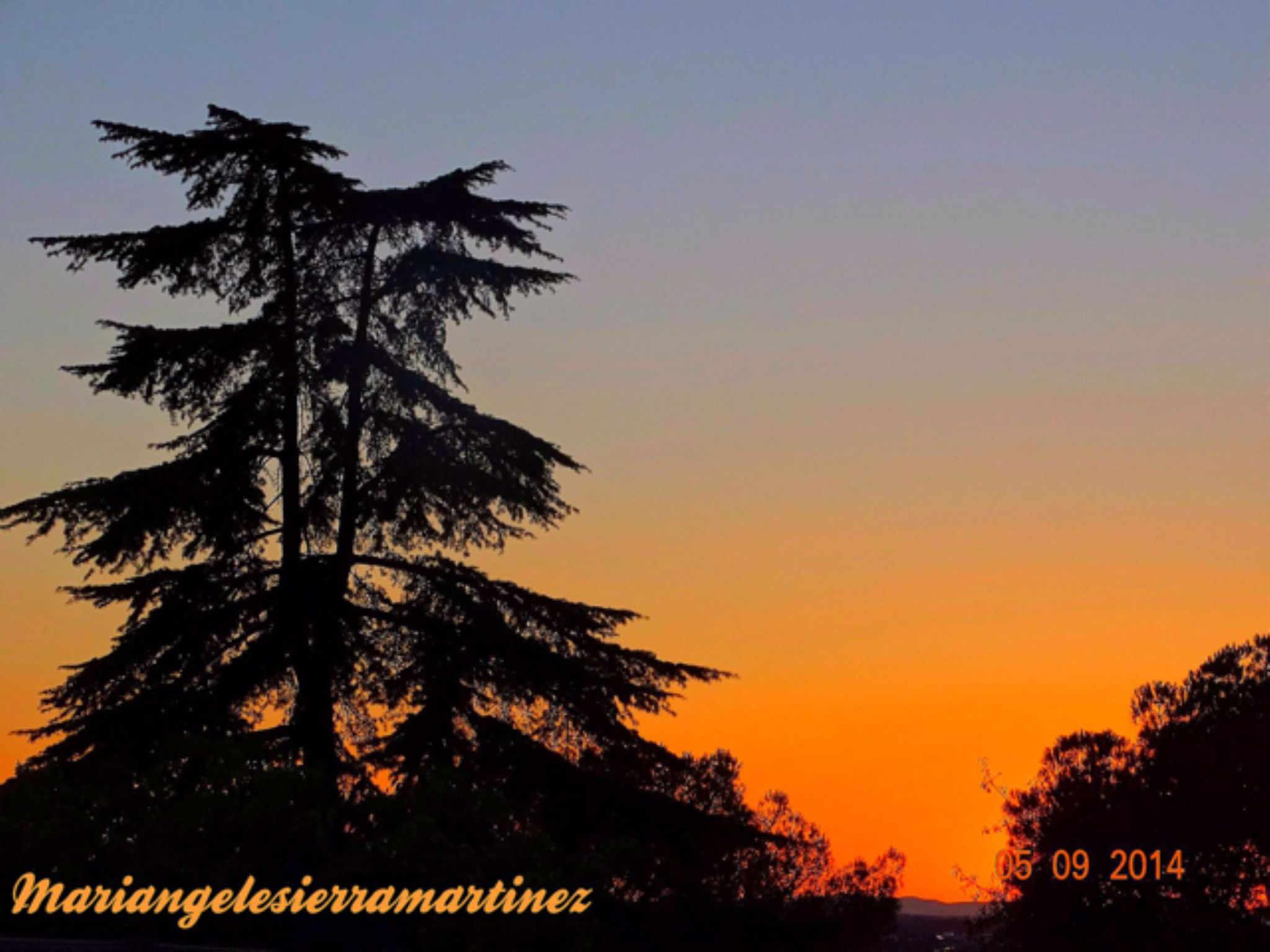 IMG_4836 by angelesierramartinez