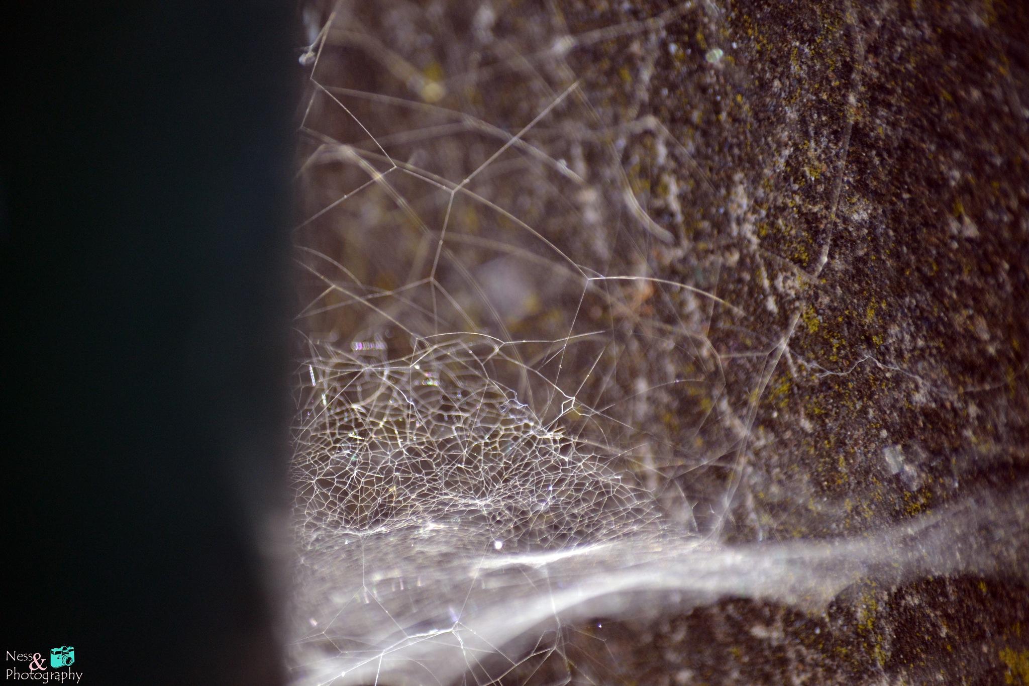 Spiderweb. by NessPhotography