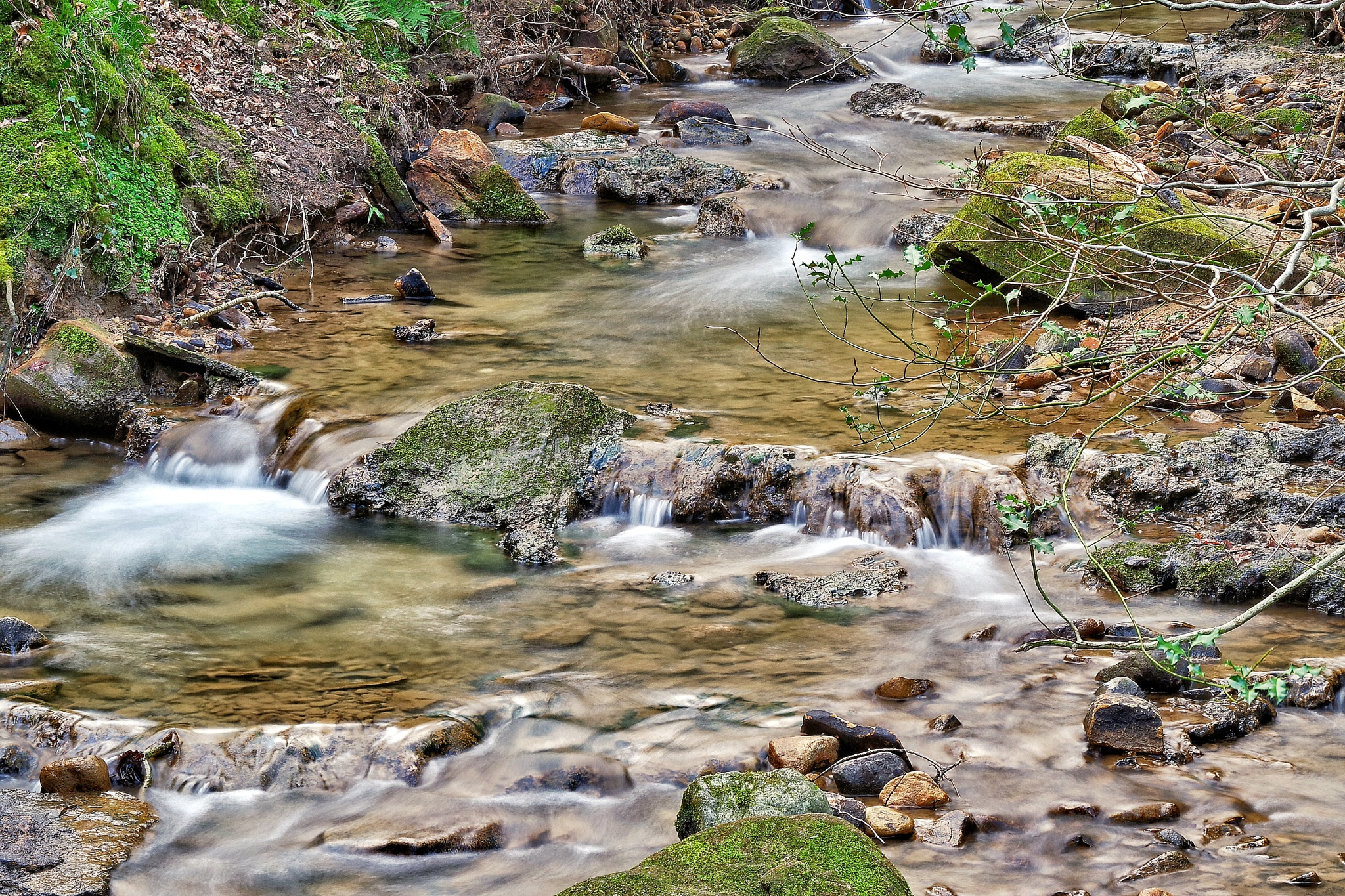 Small Stream Simplicity  by Robin Taylor
