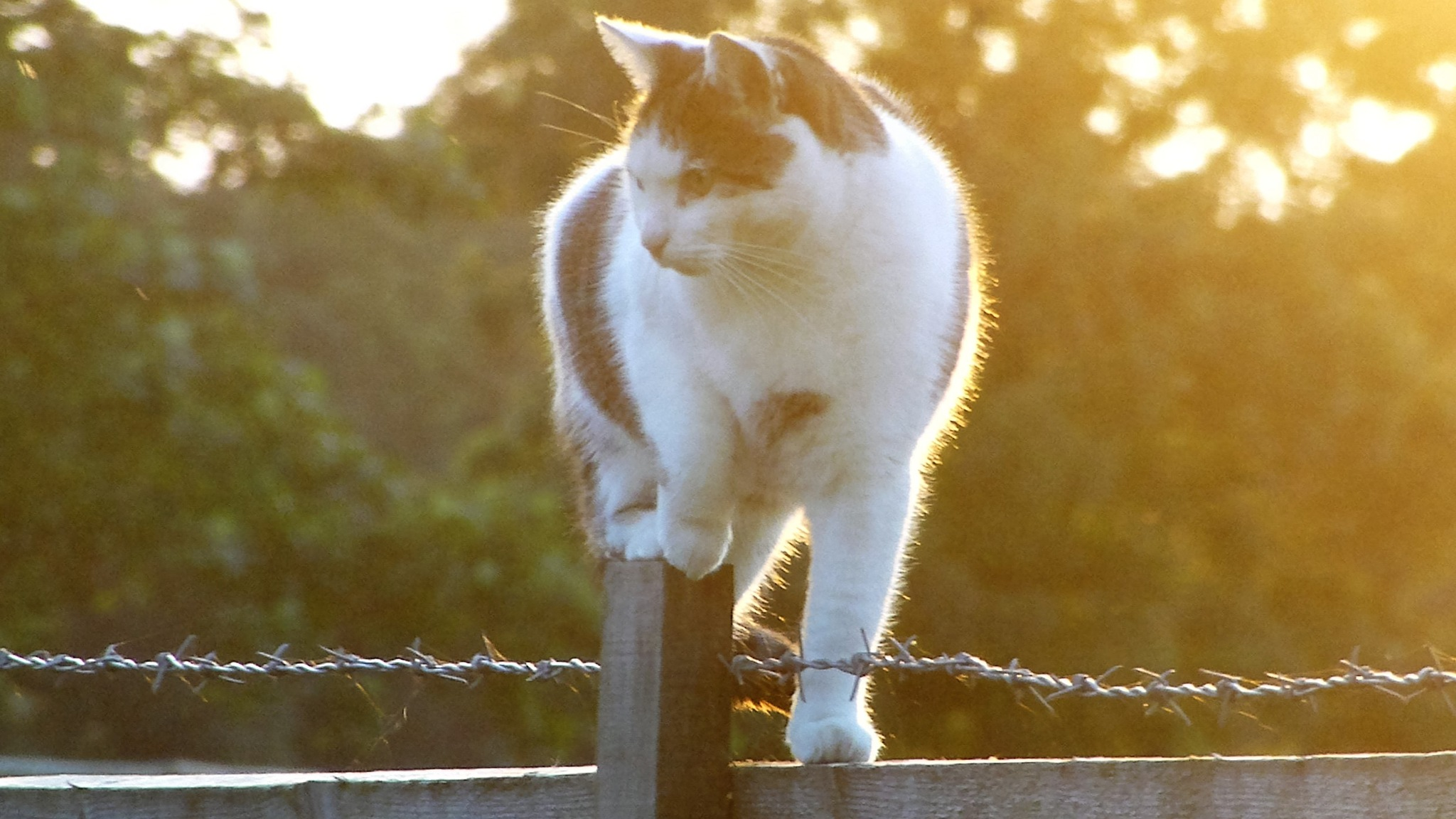 MOUSING at SUNSET . . .  by beverley