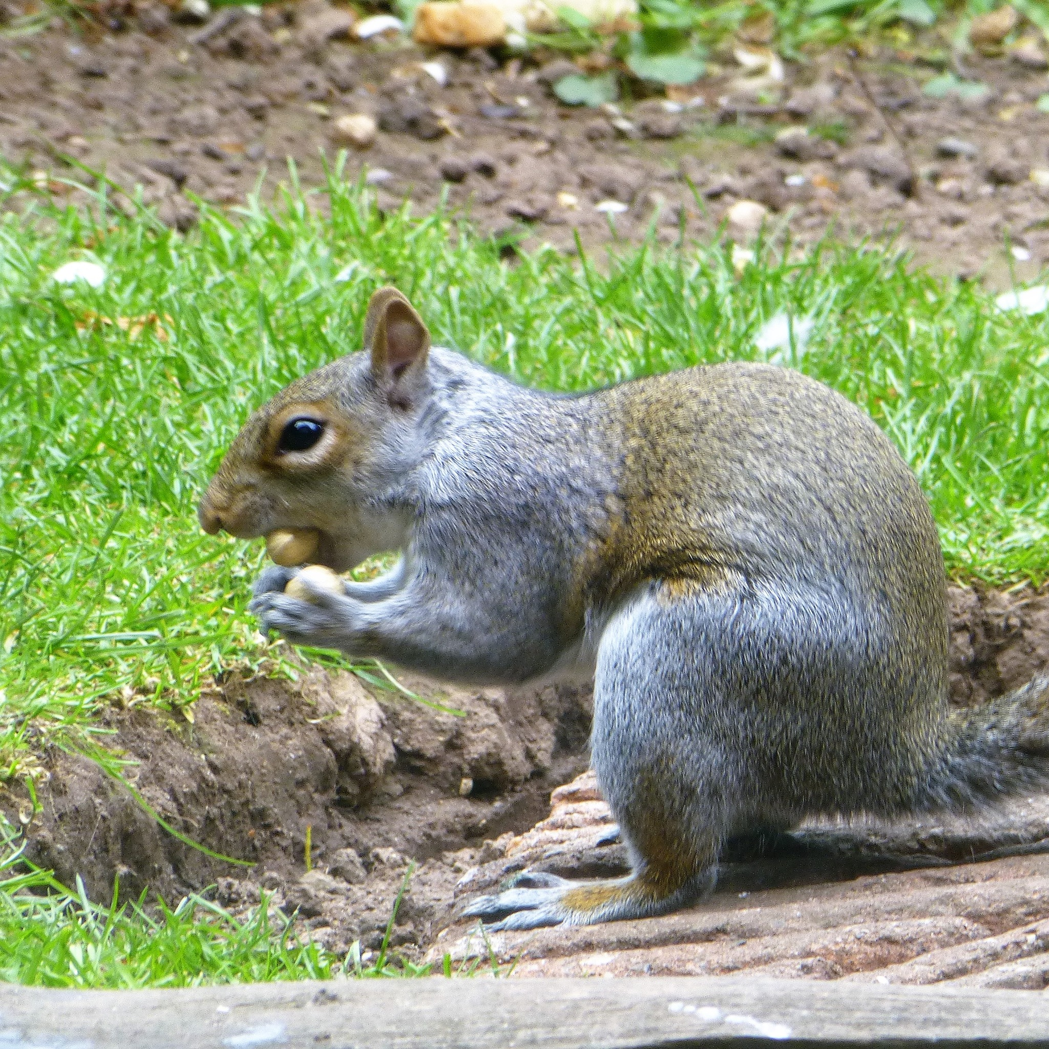 HERE WE GO GATHERING NUTS in MAY . . .  by beverley