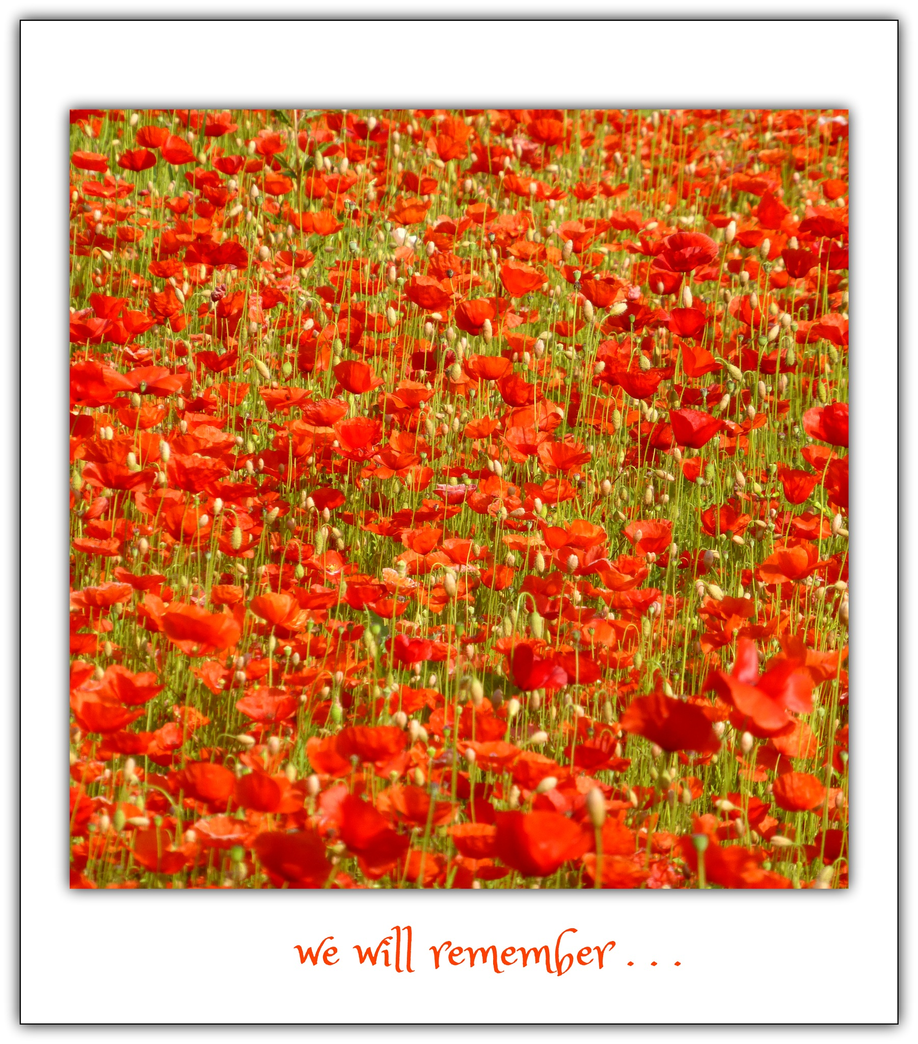 LEST WE FORGET . . .  by beverley