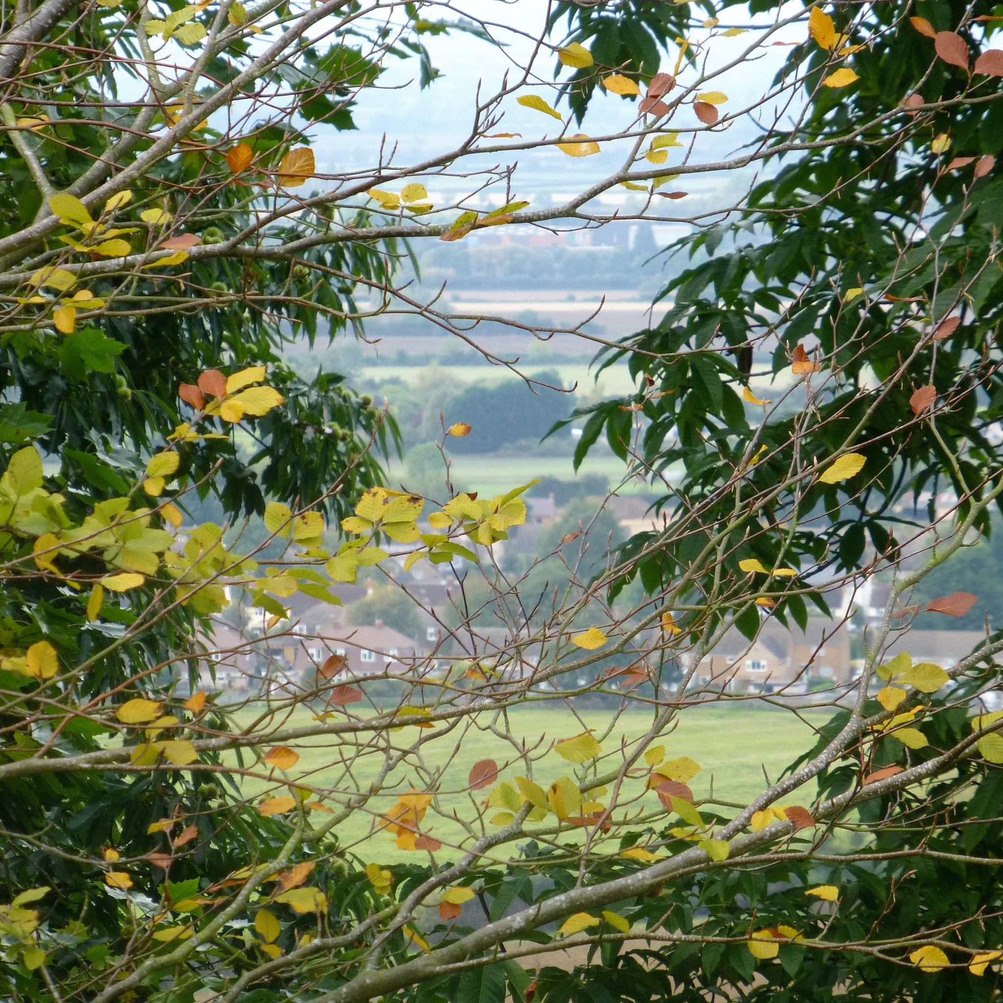 AUTUMN CALLS . . .  by beverley