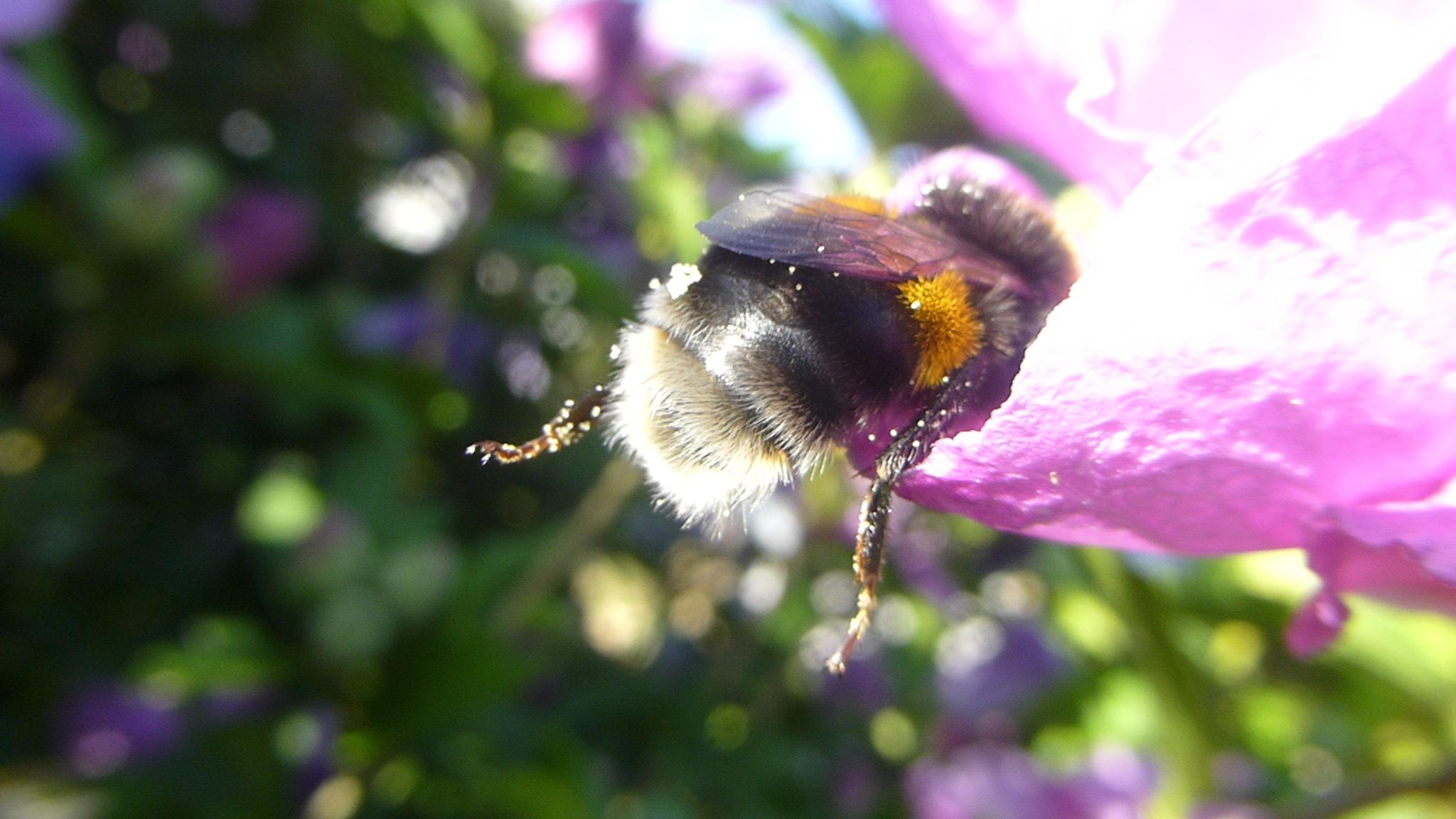 SLEEPY LITTLE BEE . . .  by beverley