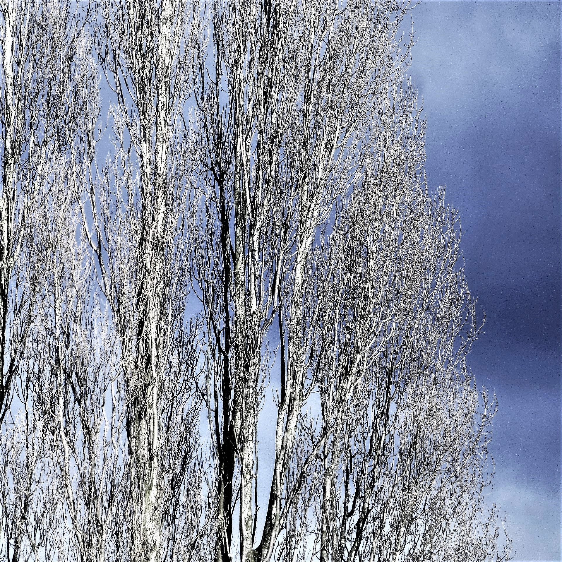 COLD WINDS and SNOW to follow . . .  by beverley