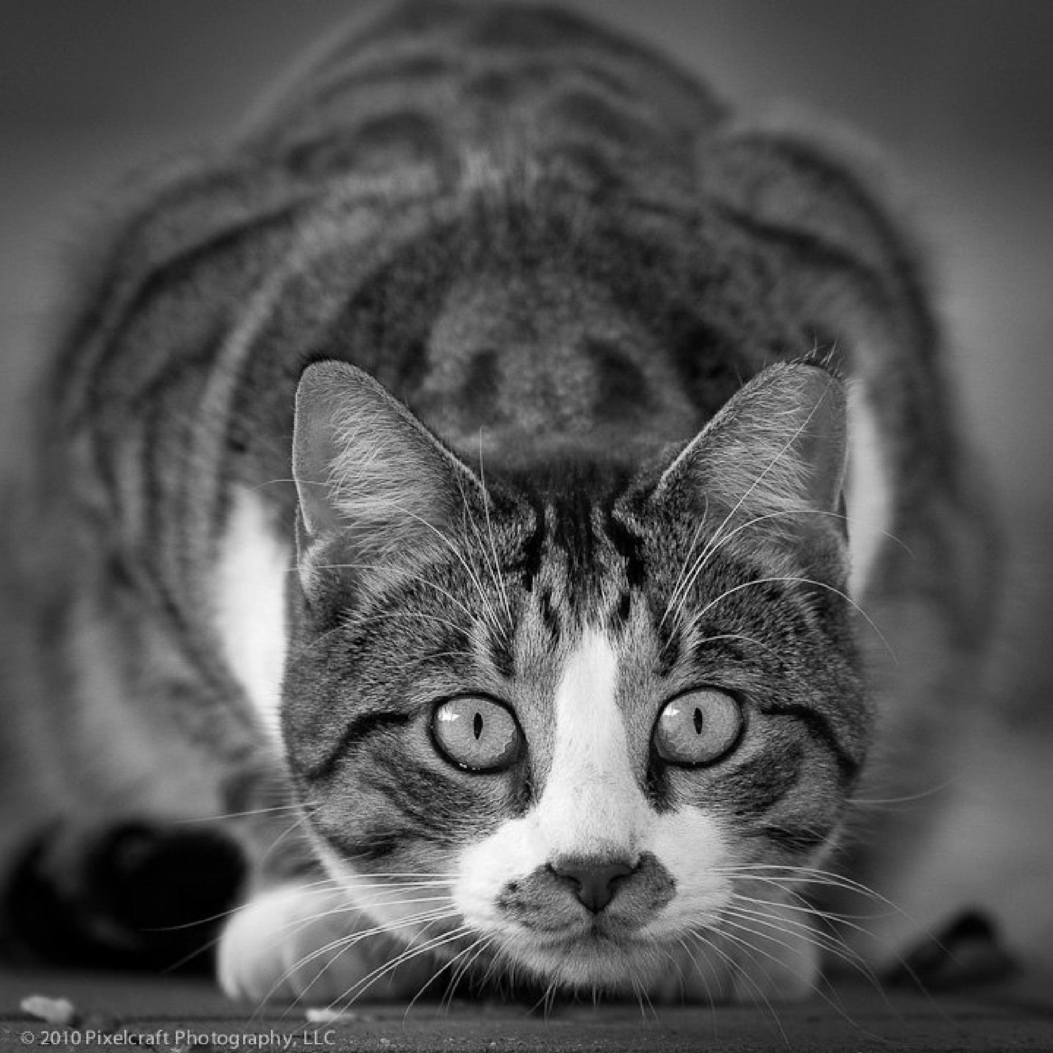 Eye to Eye by RonaldSill