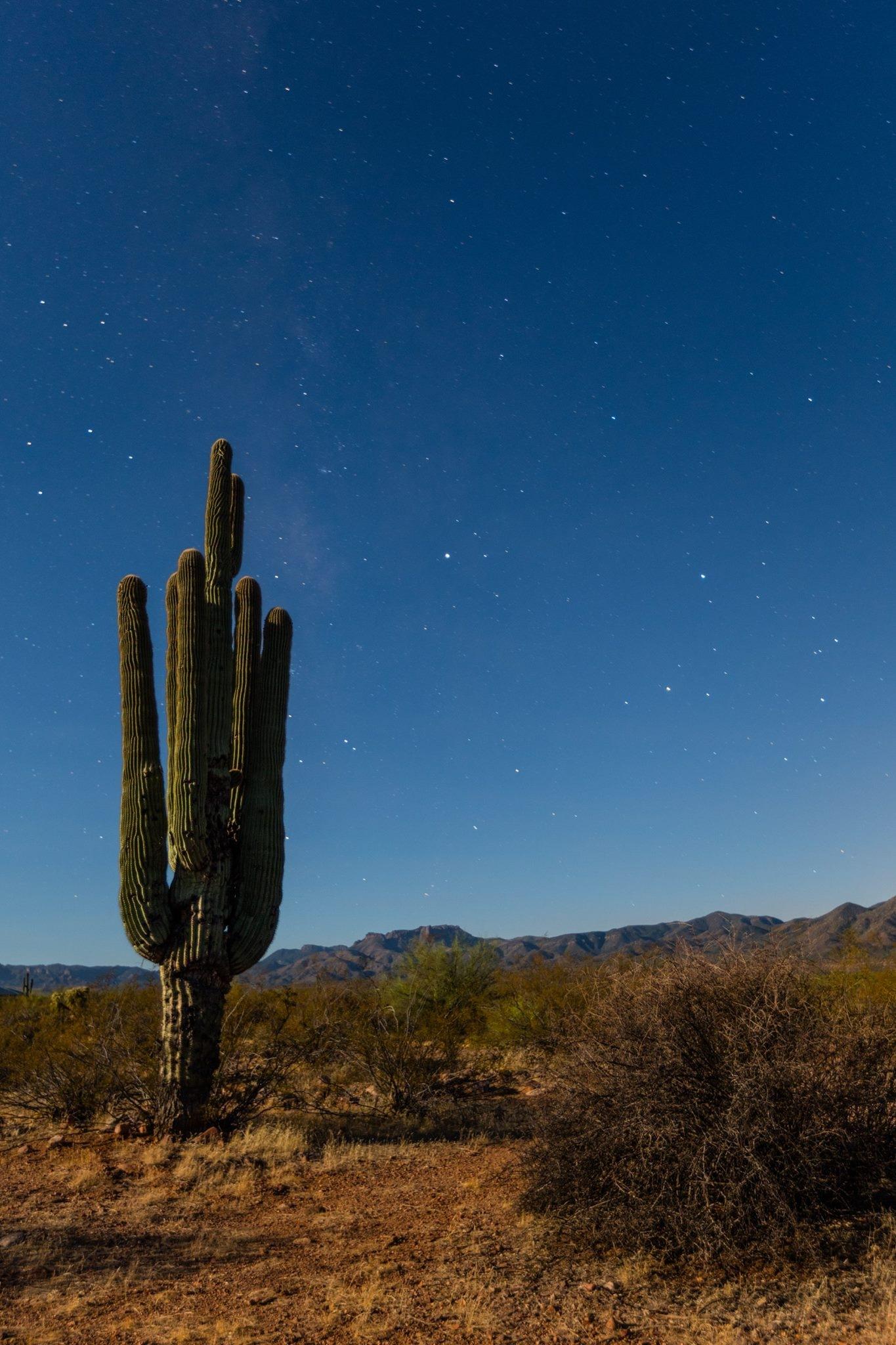 Night Cactus by RonaldSill