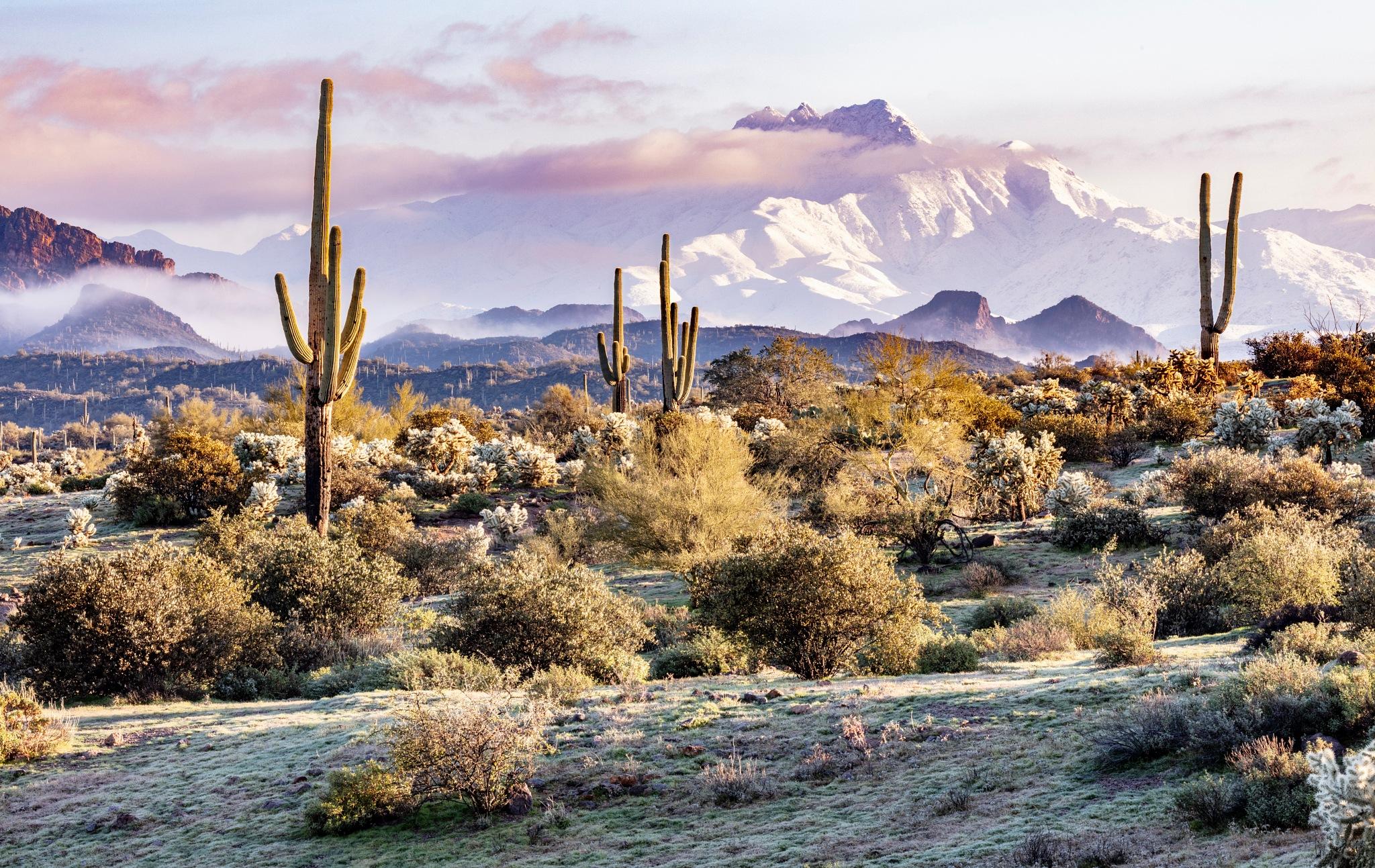 Desert Snow by RonaldSill