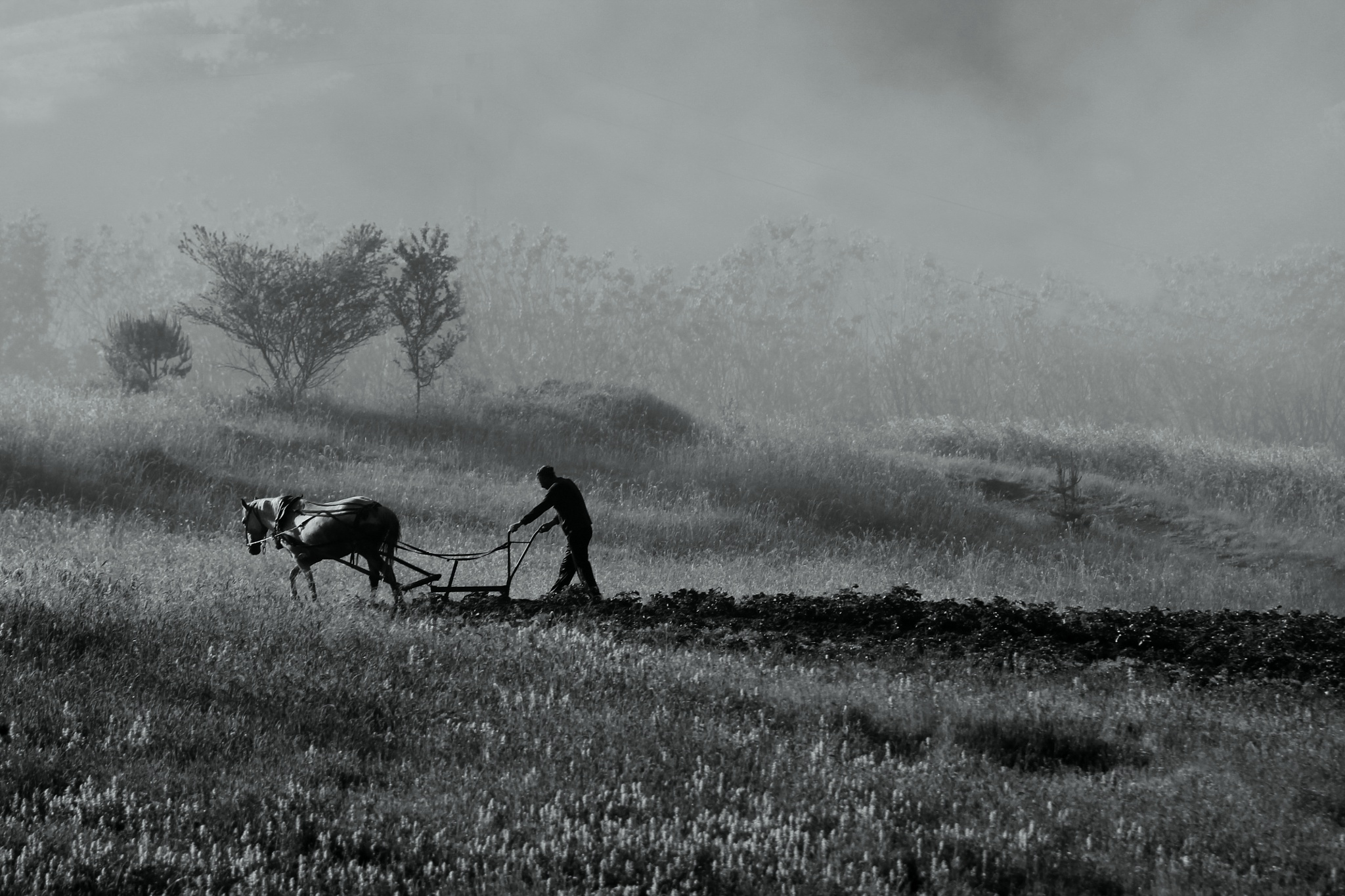 Photo in Landscape #amazing #morning #beautiful #foggy #fog #work #horse #bulgaria