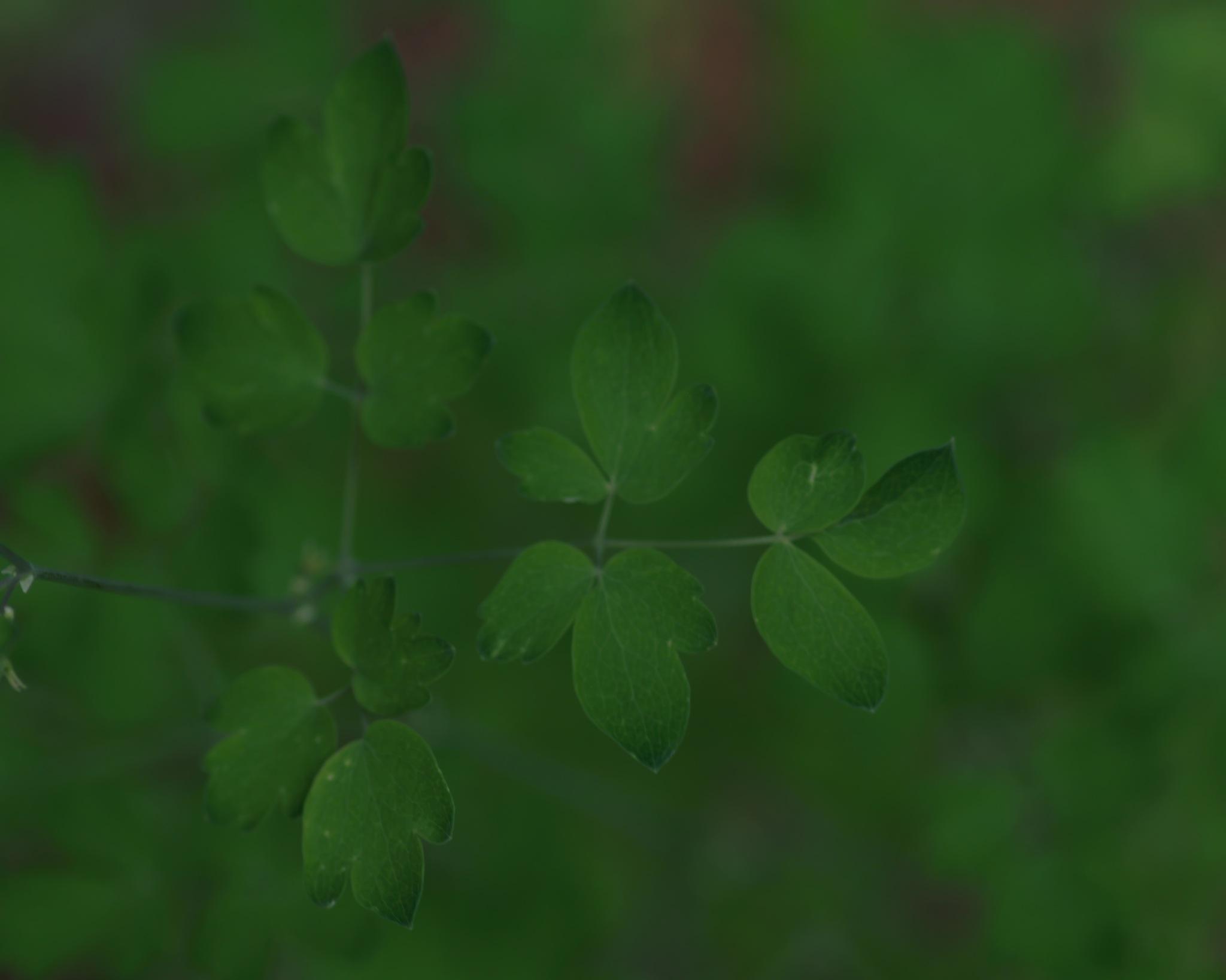 Green on Green by Craig Adamson