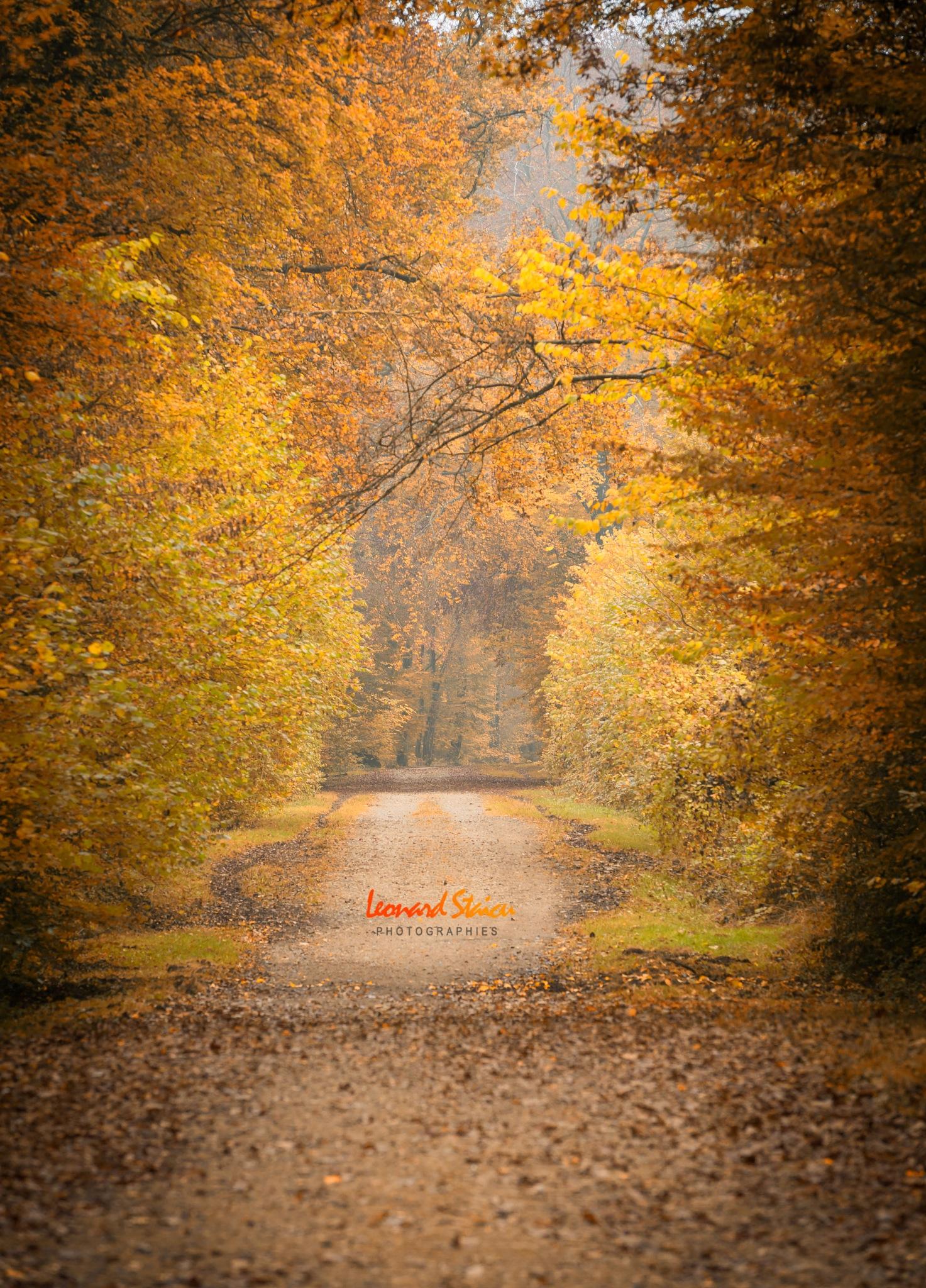 Couleurs d'automne by Leo