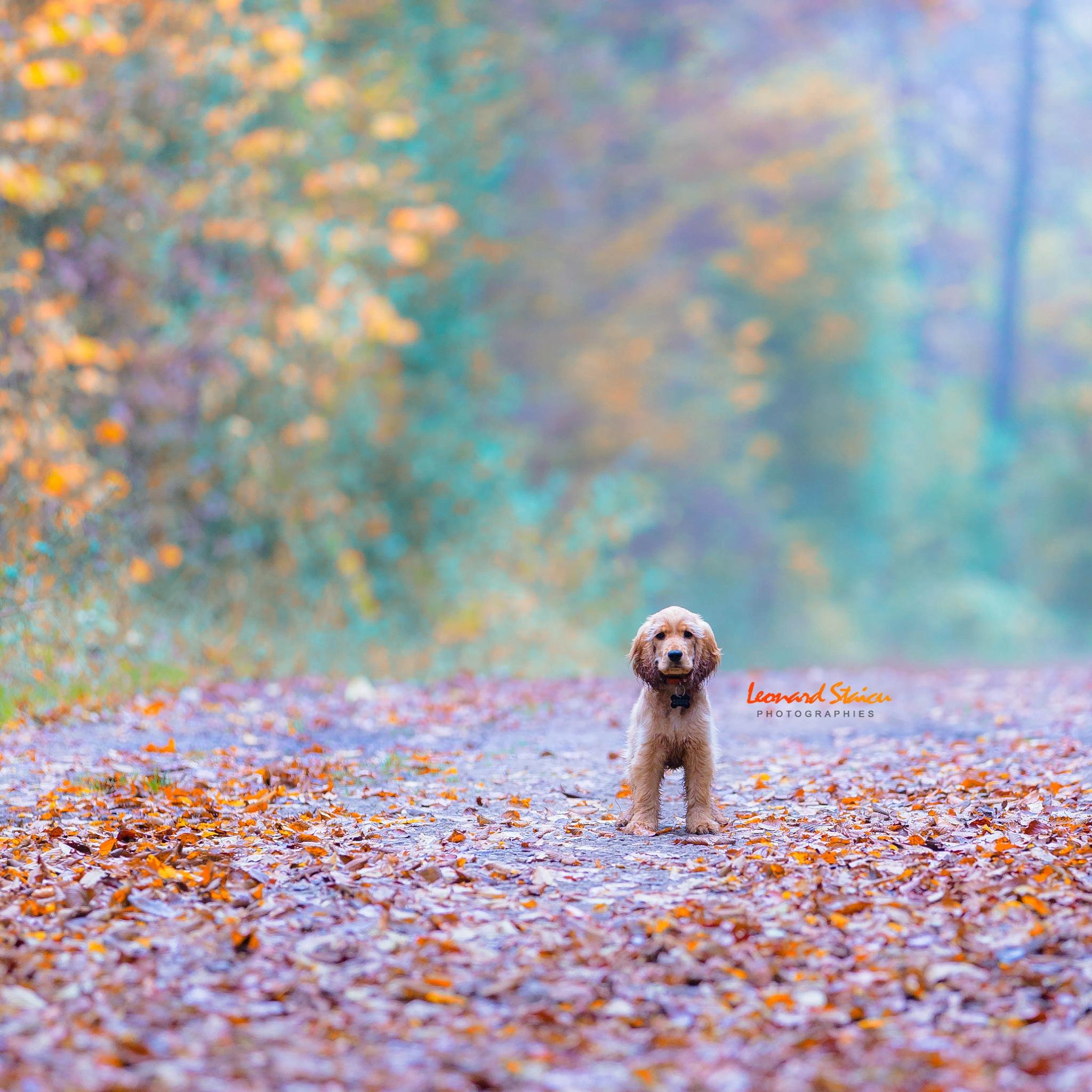 Balade en forêt by Leo