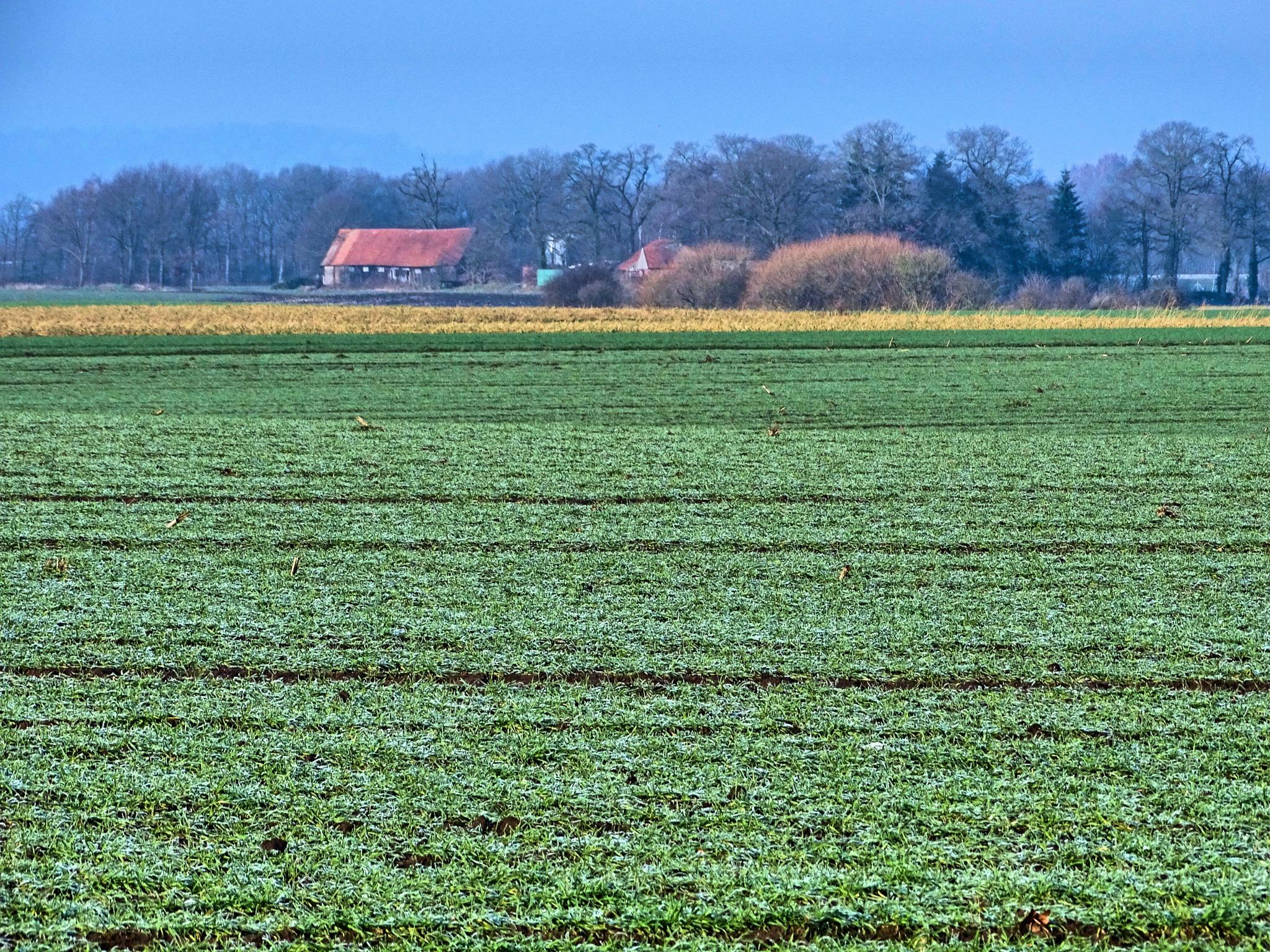February Landscape by Aneta