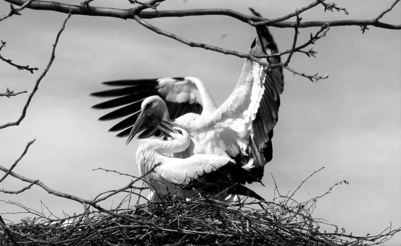 Stork by Flep47