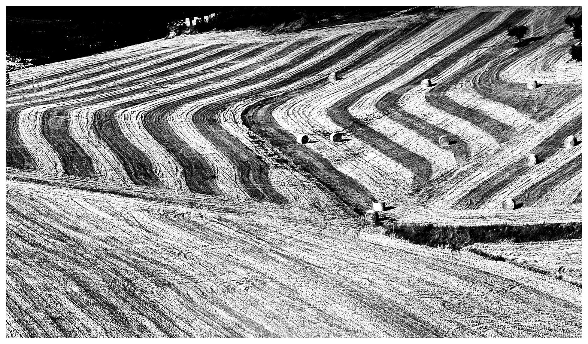 Slalom by Franco Di Vittori