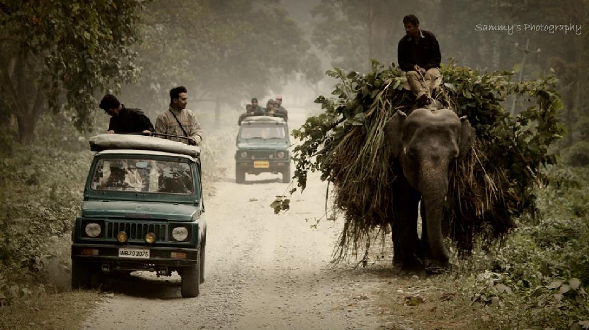 Jaldapara wildlife sanctuary by samjones007
