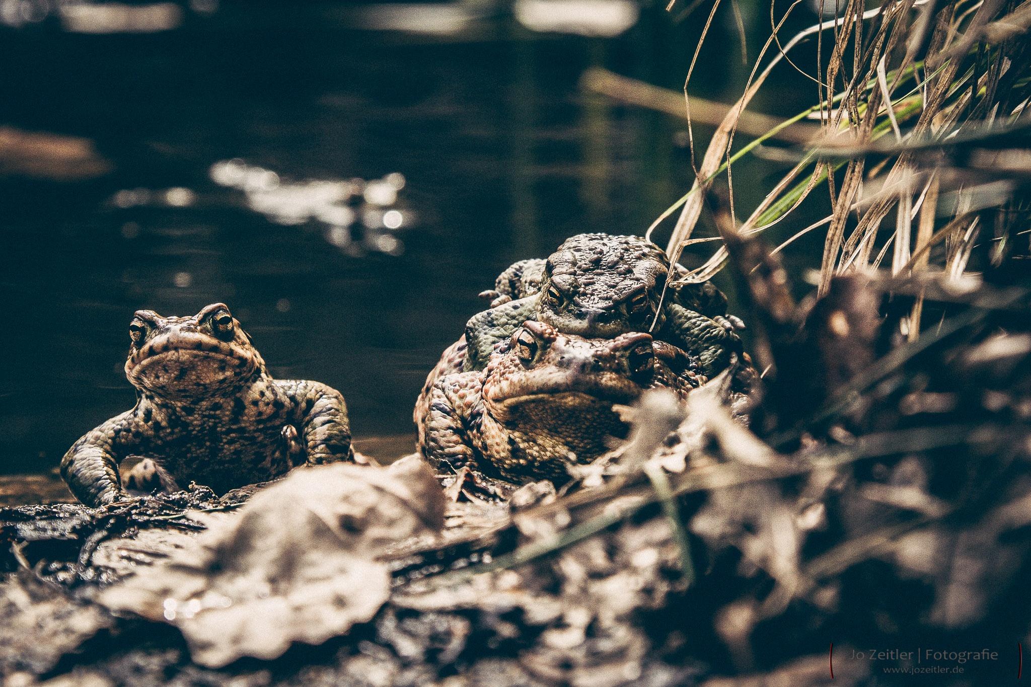 Toad by Jo Zeitler