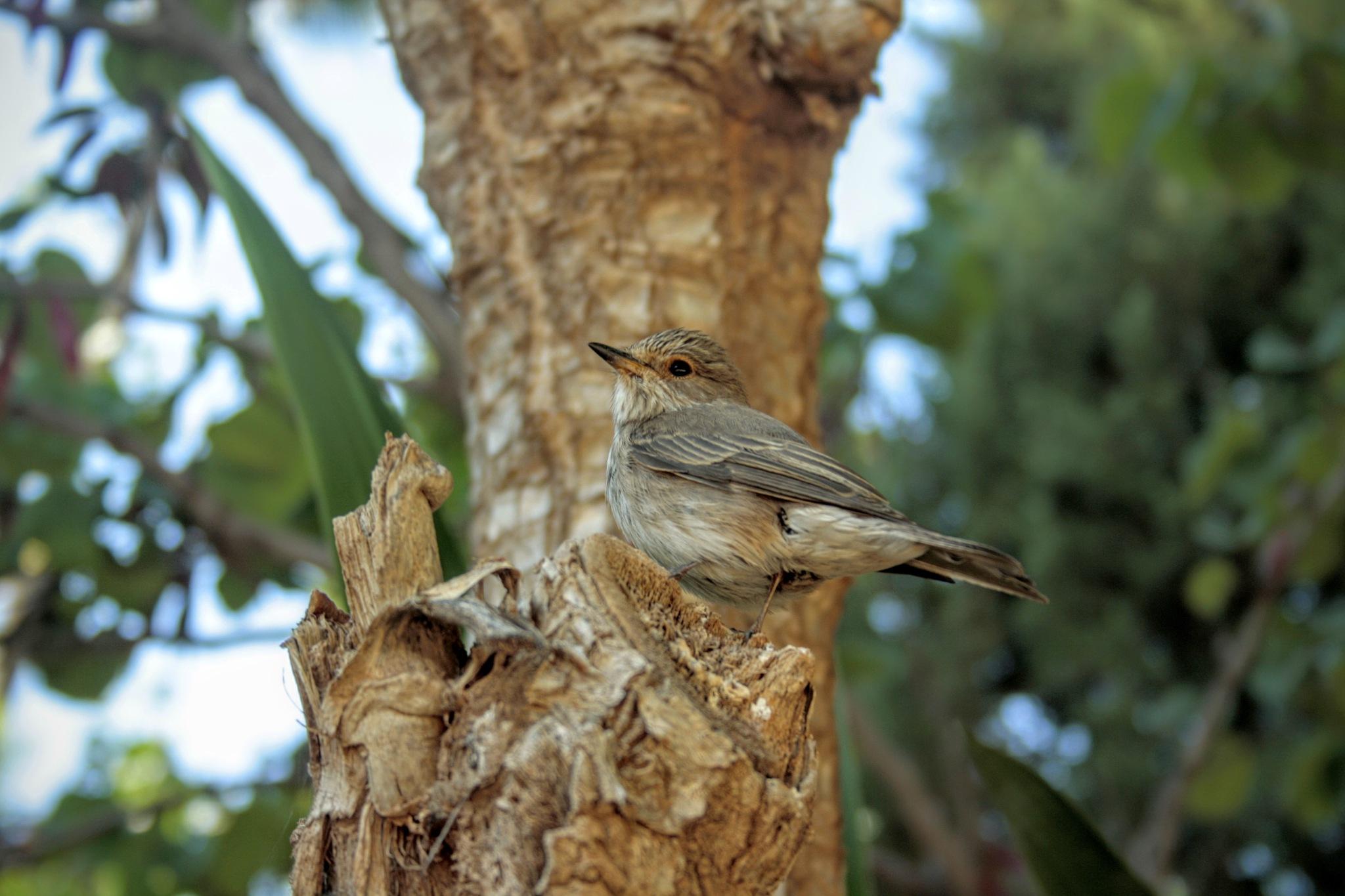 Oiseau by Mostafa Bentayeb