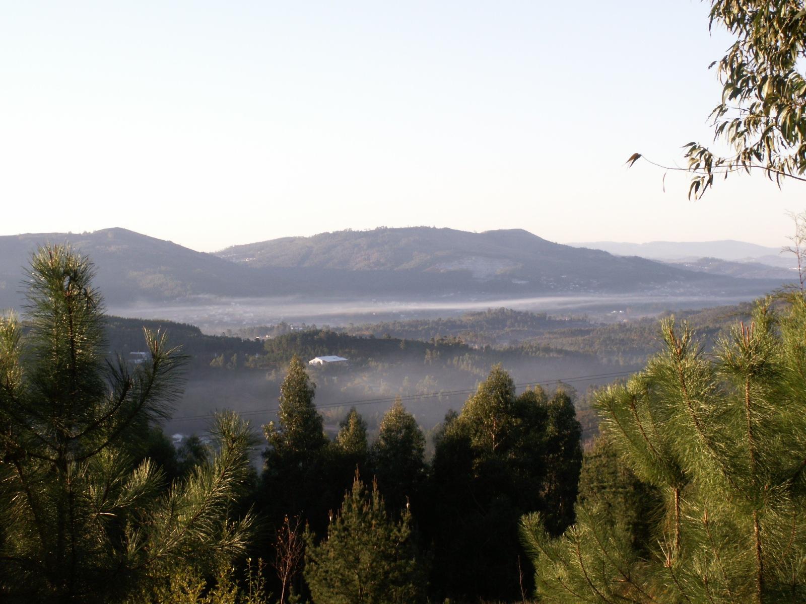 Morning mist by Carlos Rosa Ferreira