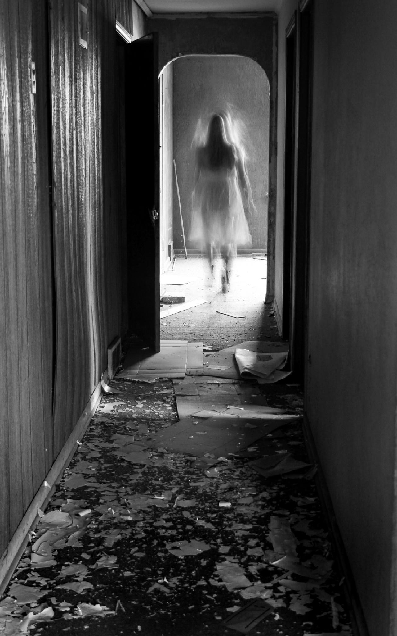 Remnant by Melissa Stewart
