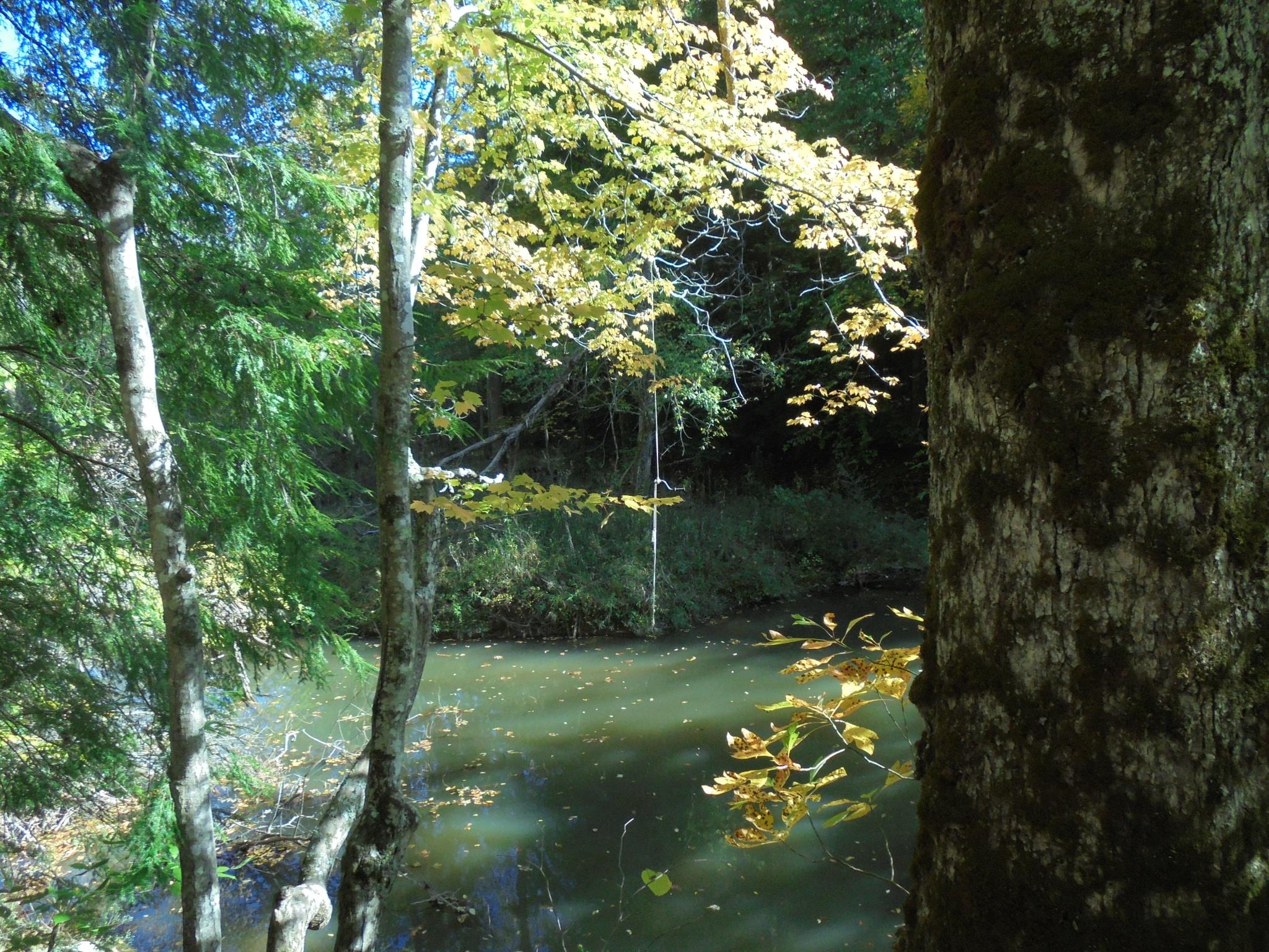 Bethel swimming hole in McKim Creek, West Virginia by conniemossor
