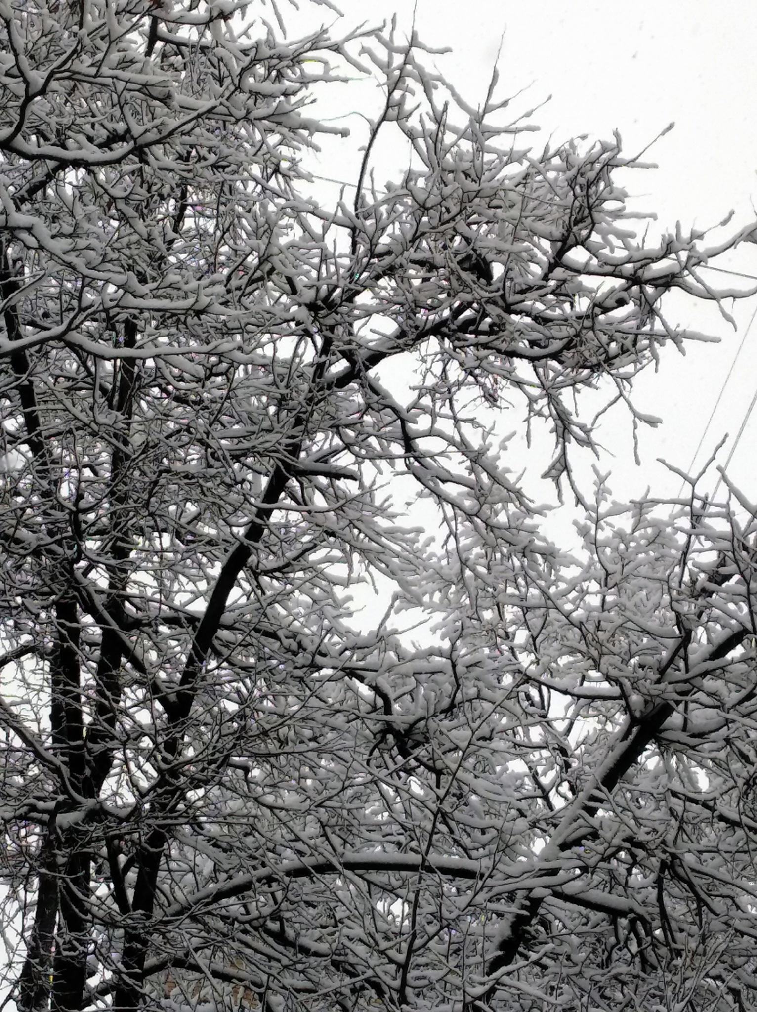 Photo in Cityscape #winter #snowing #trees