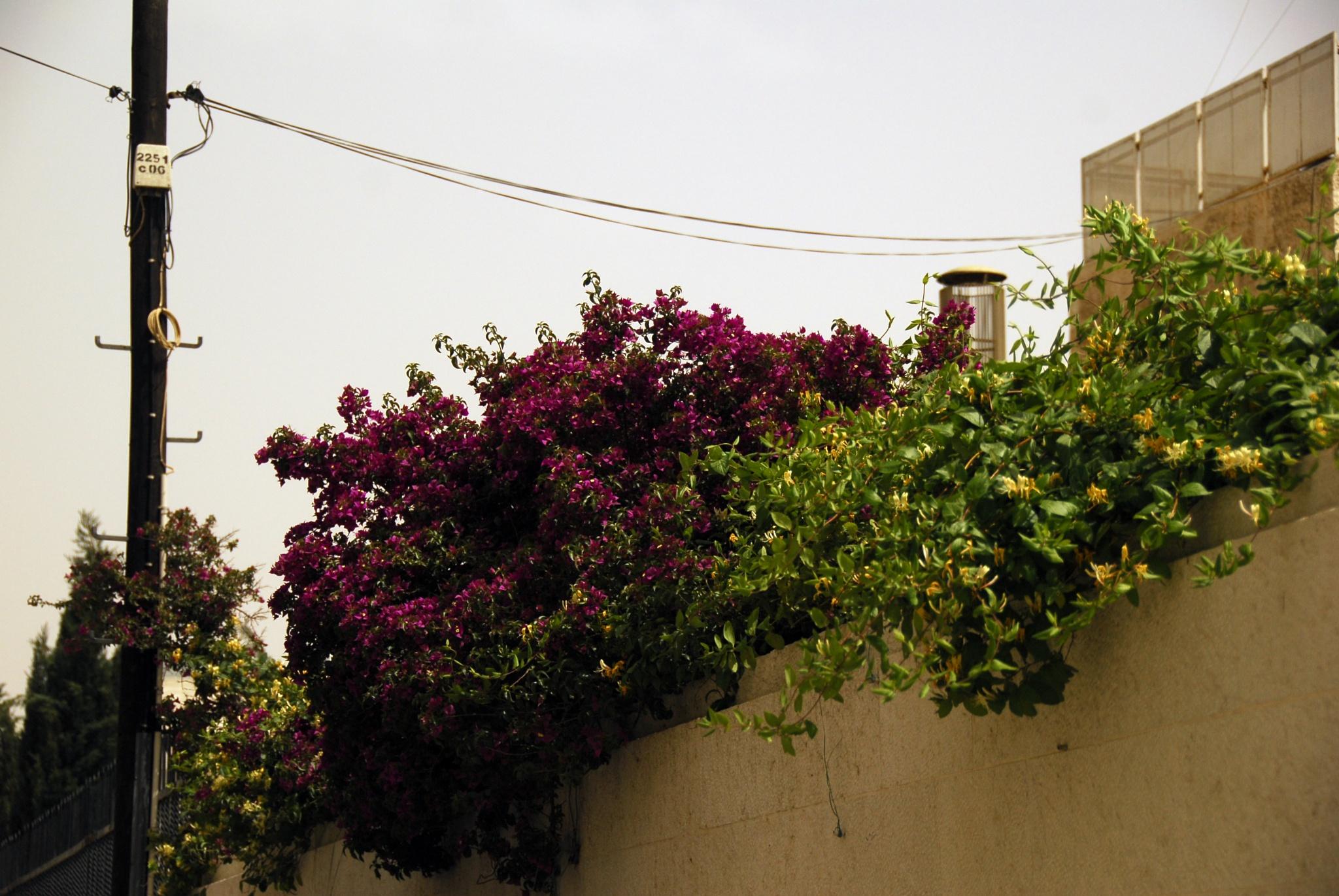 smwhere in Madaba by Alex  Falcon