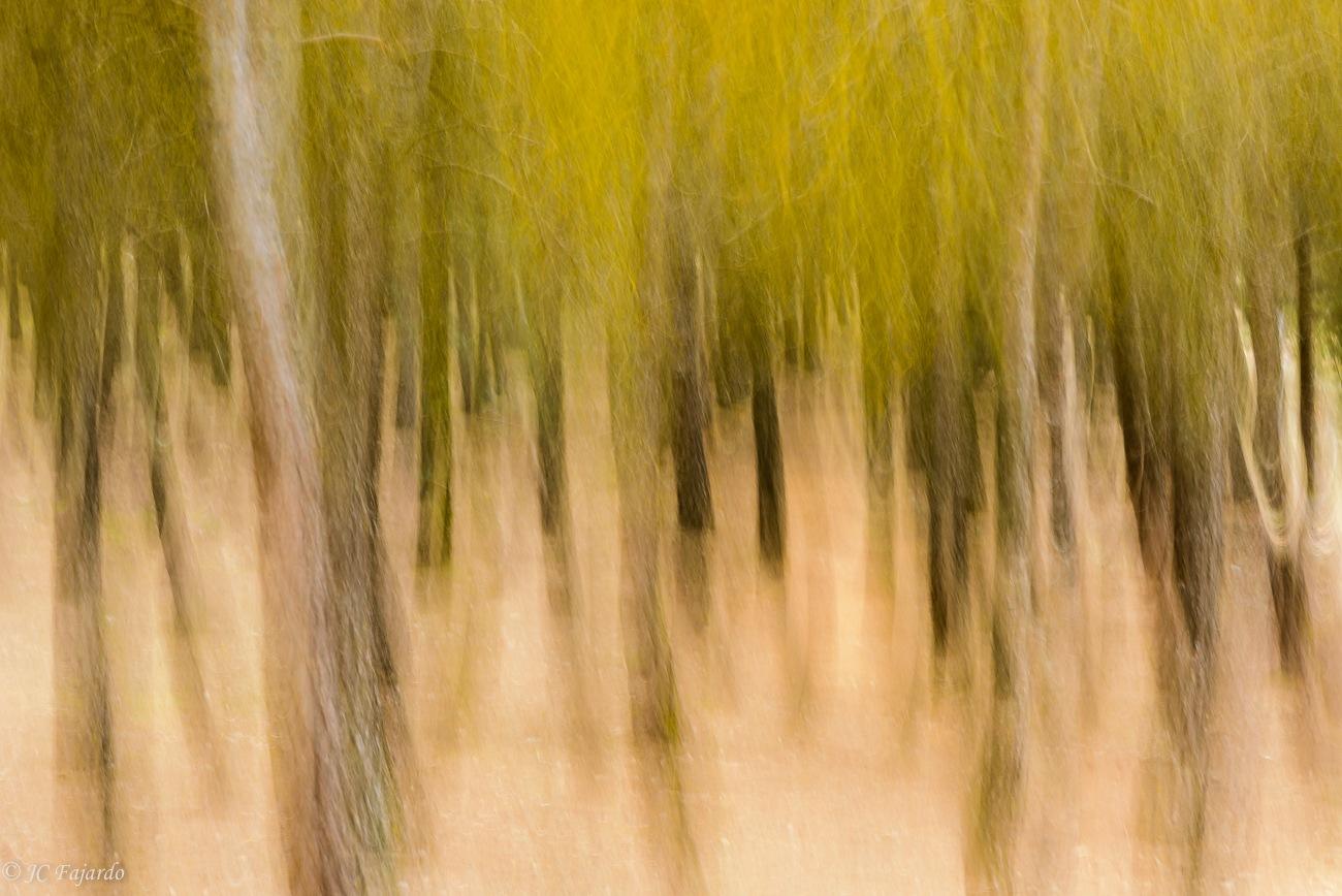 Between pine tree by Juan Carlos Fajardo Juan
