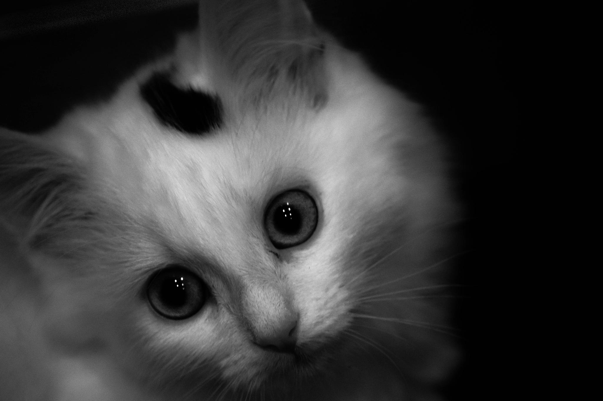 wide eyes by danmilford