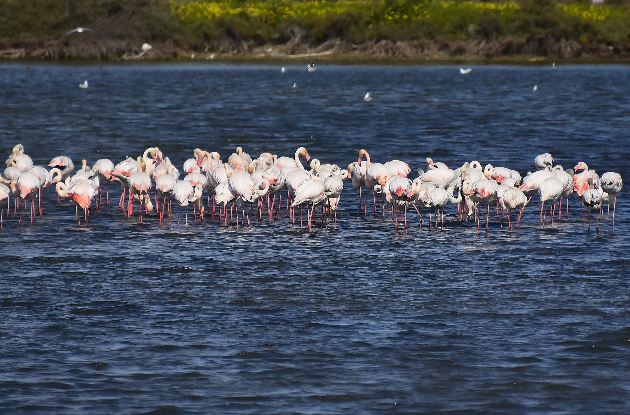 FLAMINGOS by Luis Salmonete