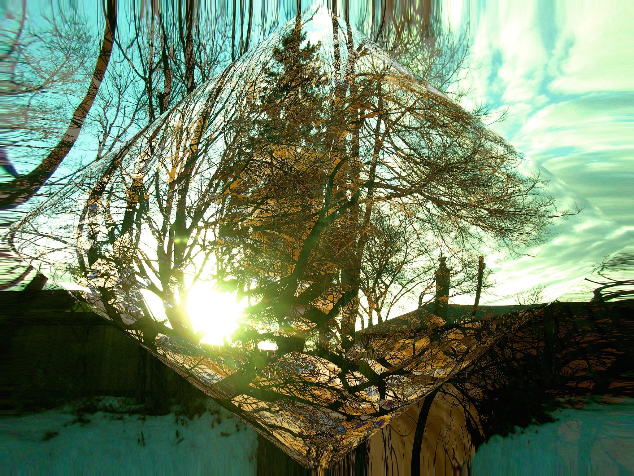 sunthrutreez by Anastasia Pellerin
