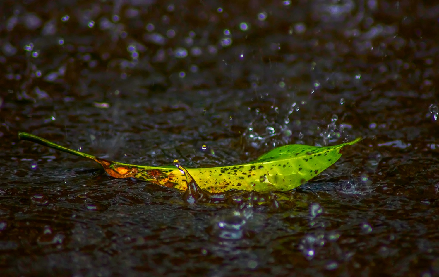 Look at the fallen leaves no longer fidelity measure because age will not be able to be stretched. by Bambang