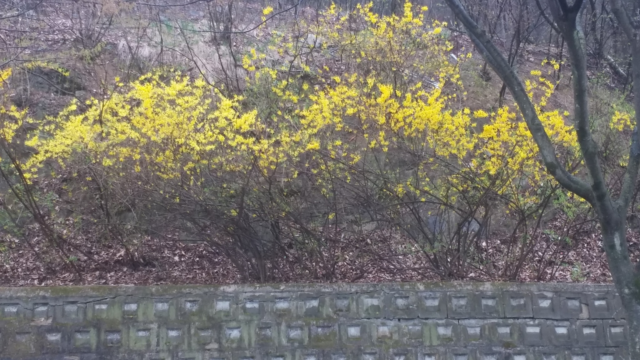 forsythia by ParkSeong Hyeon