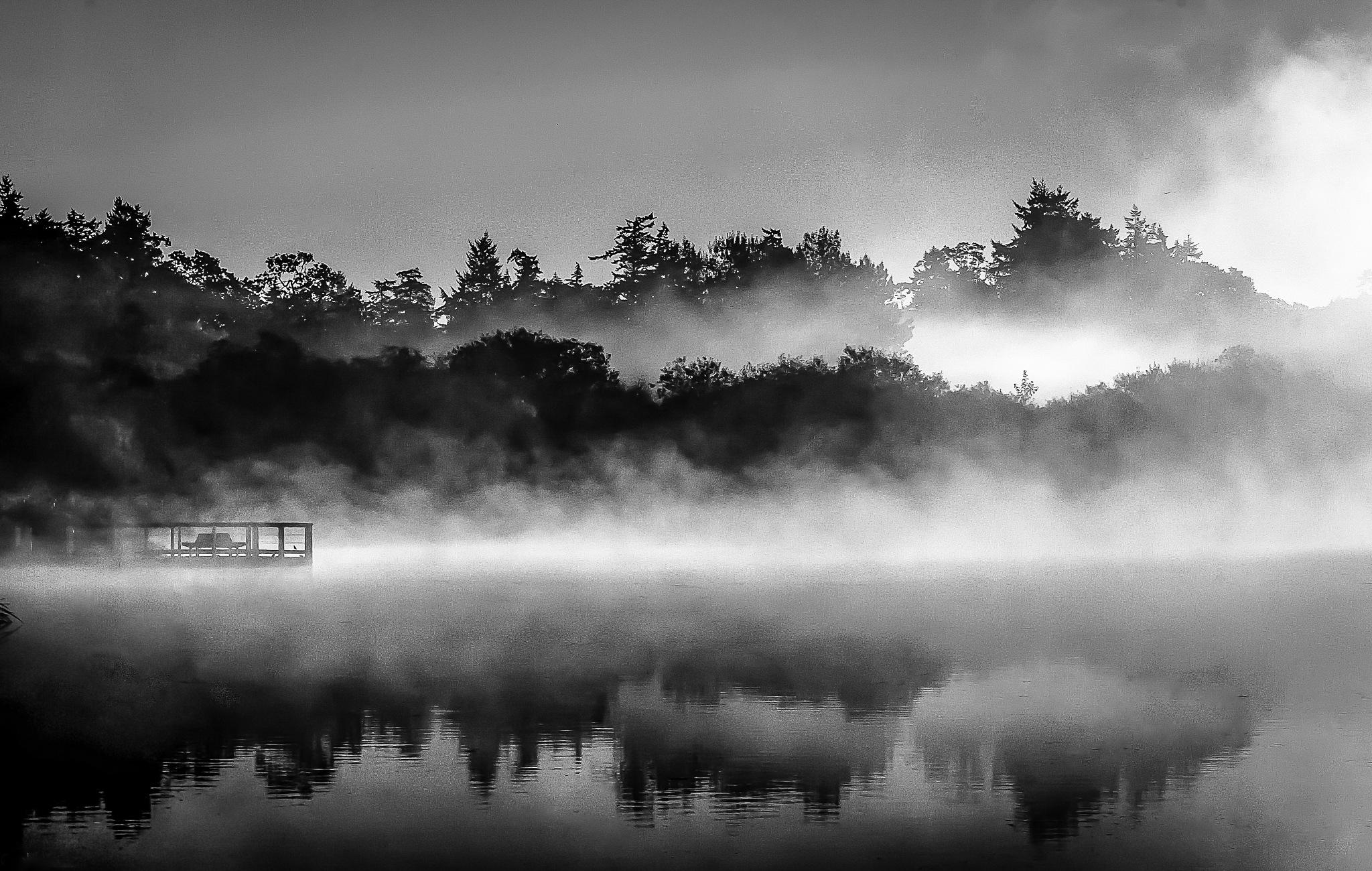 Swan lake ( bnw edit) by ink59