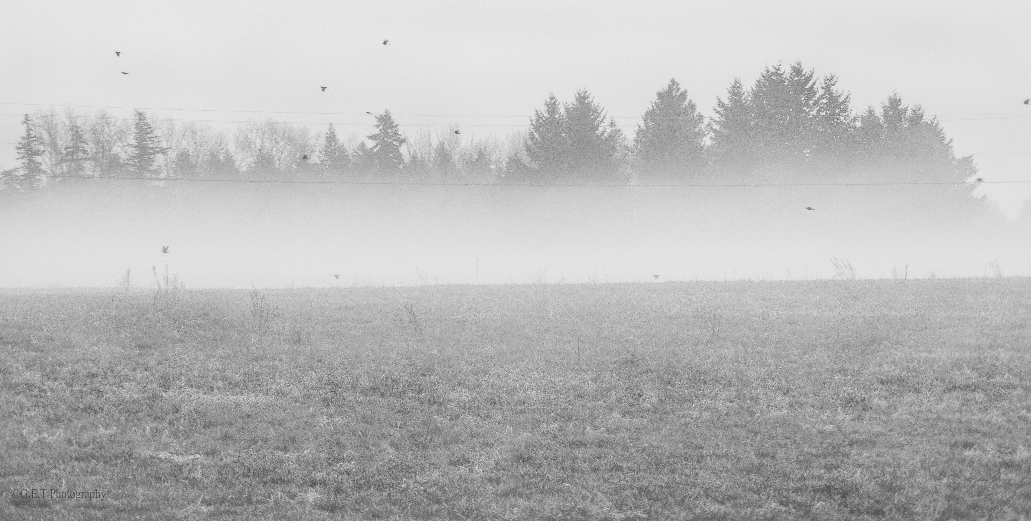 Morning Fog  by Gregory Thomas