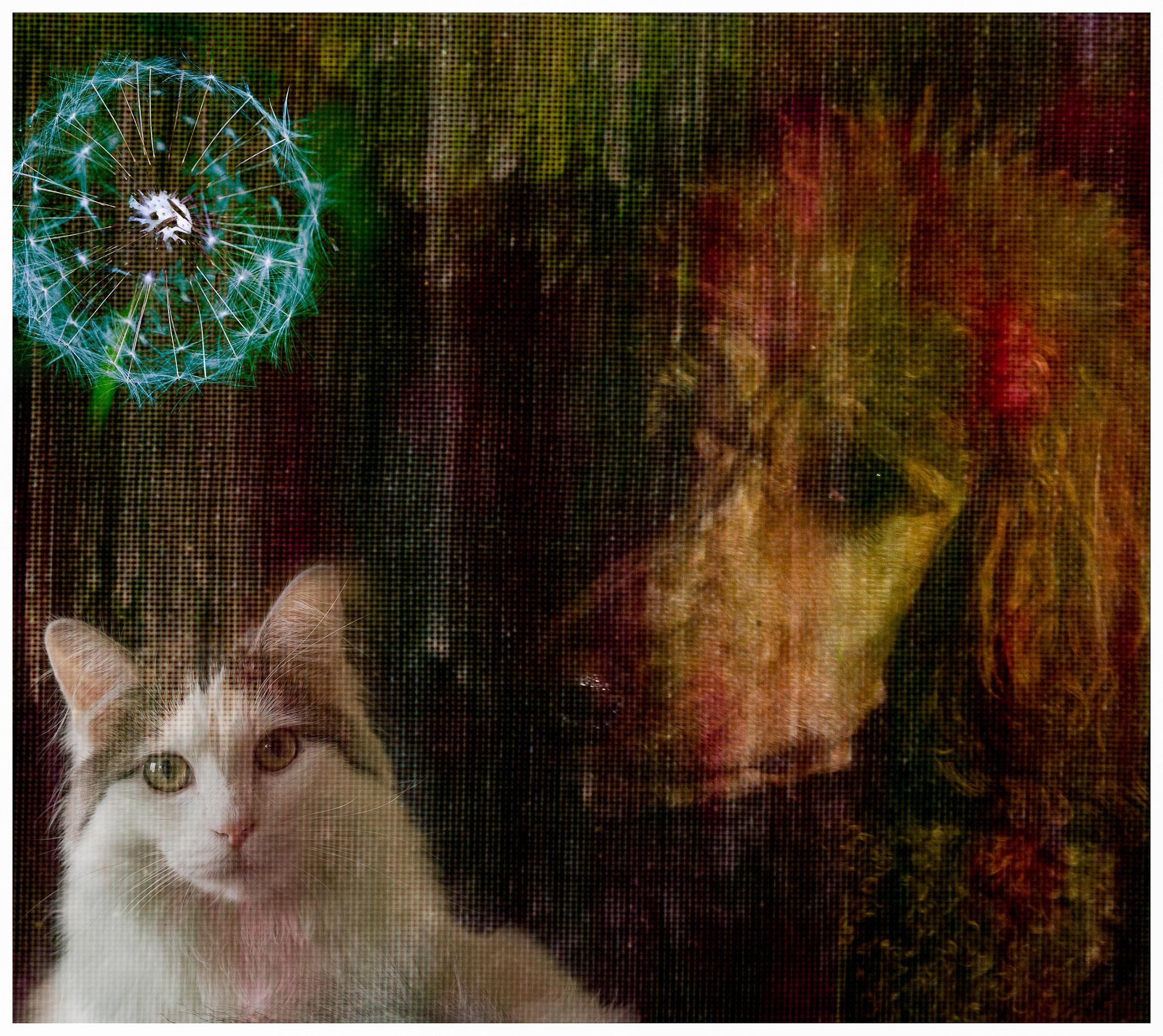Photo in Abstract #cat #abstract #dreaming