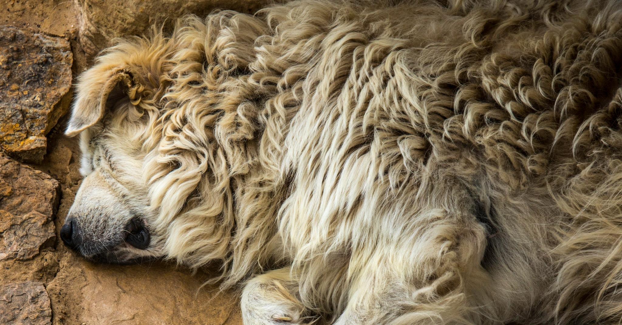 Pile of Pet by FritzMendell