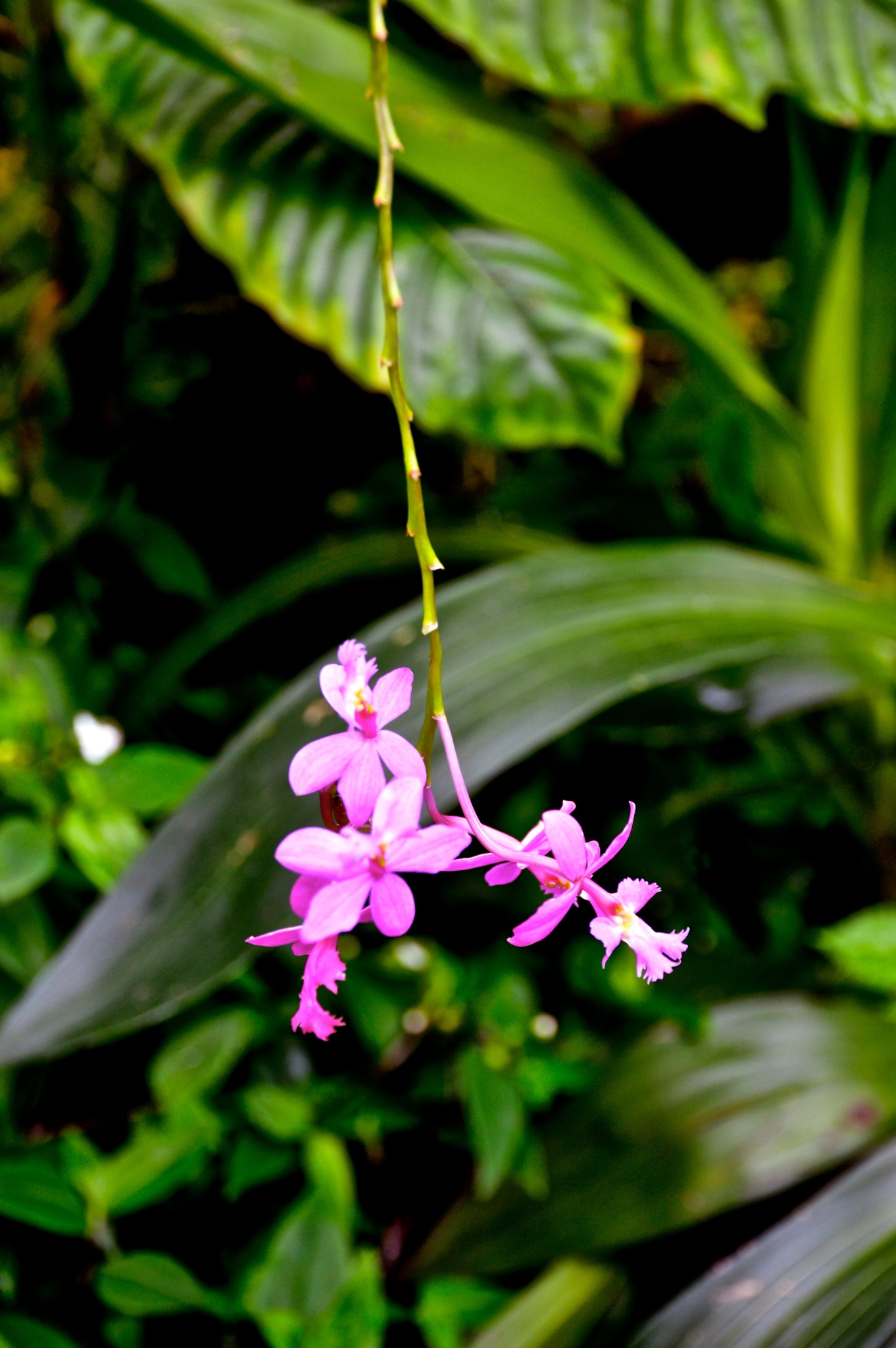 Tiny  orchid flowers by In Your Eyes