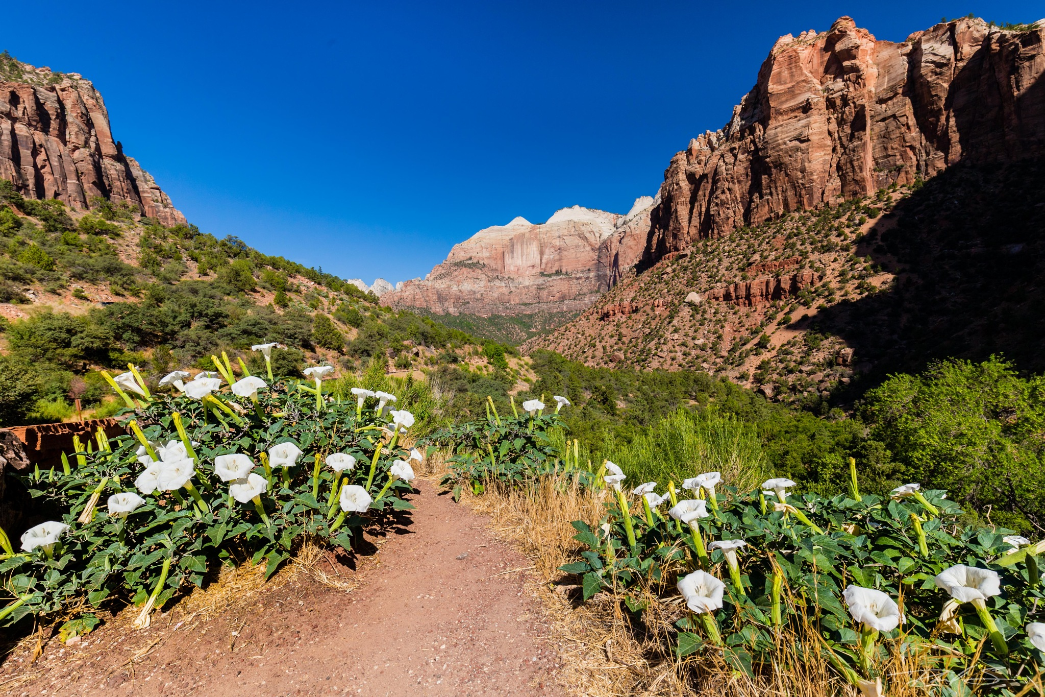 Zion Valley Wild Flowers by Schultzp